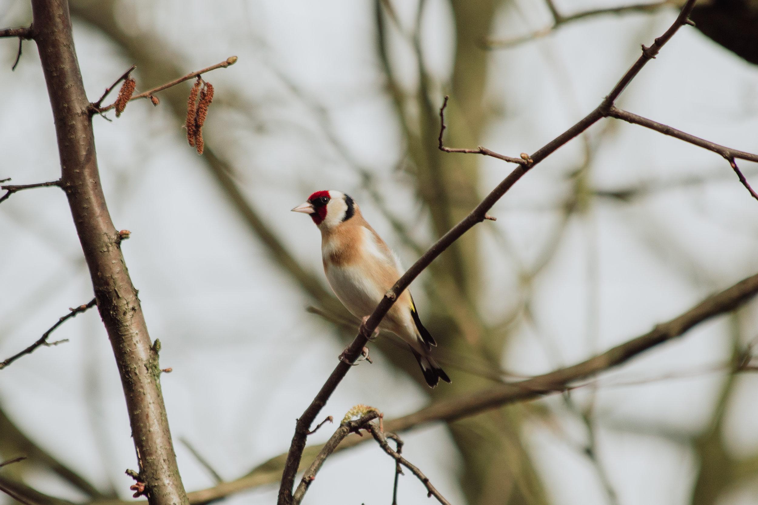 Feeding-the-birds-in-your-garden
