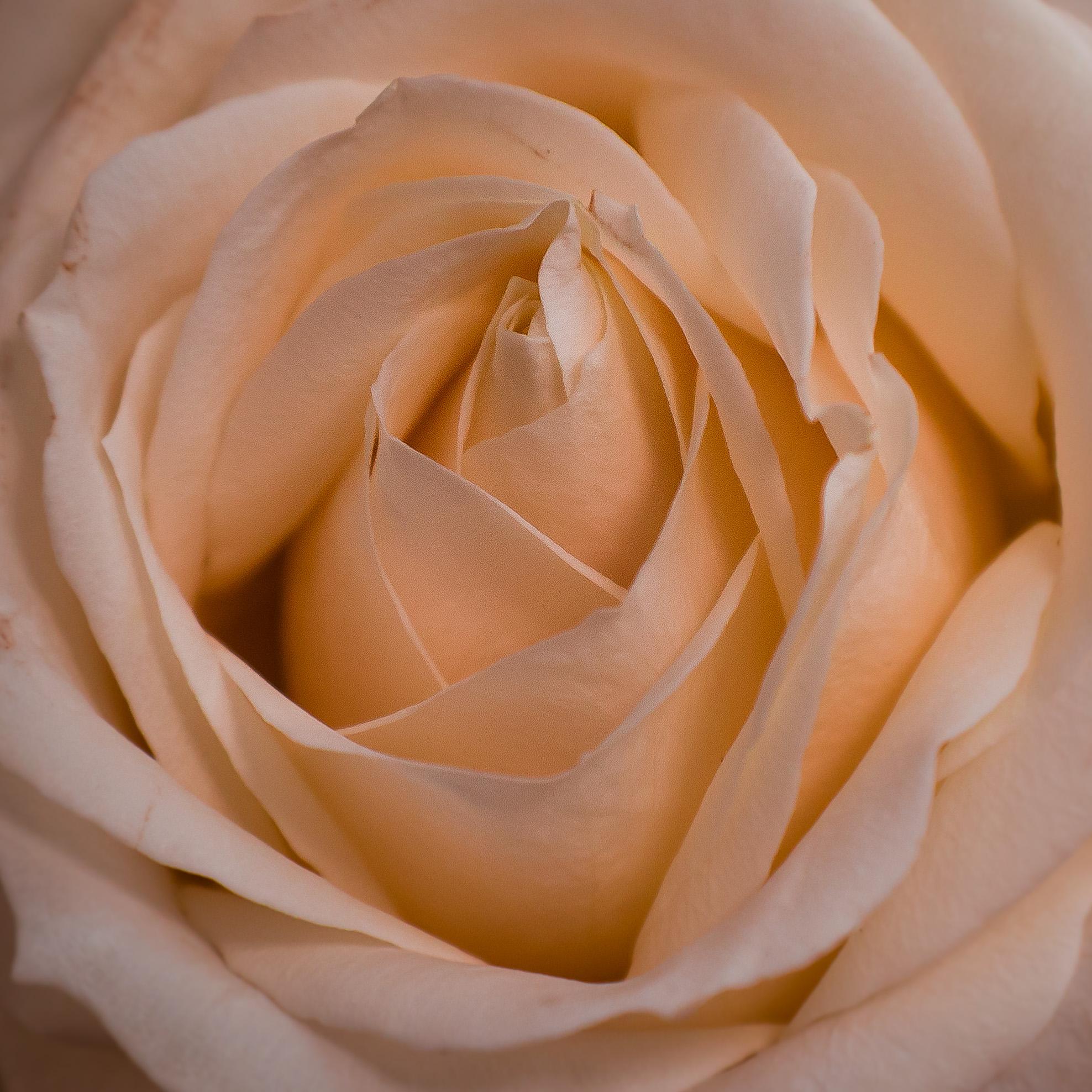 Escapism of Fragrance summed up through Simple Elegance -