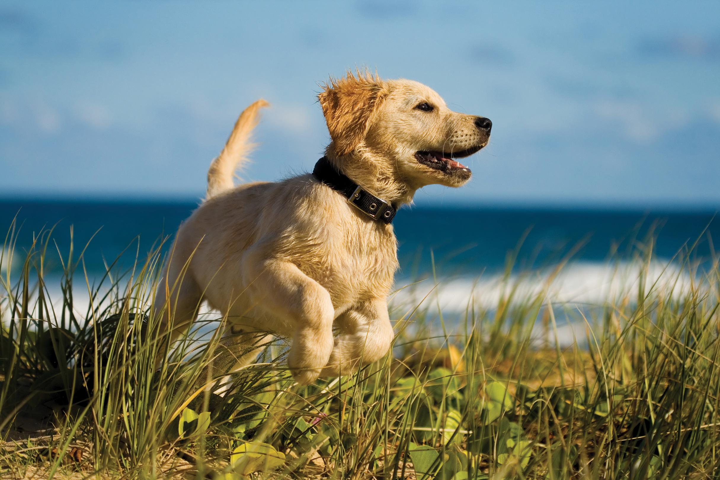 puppy-jumping-on-the-beach-PQL38HL.jpg