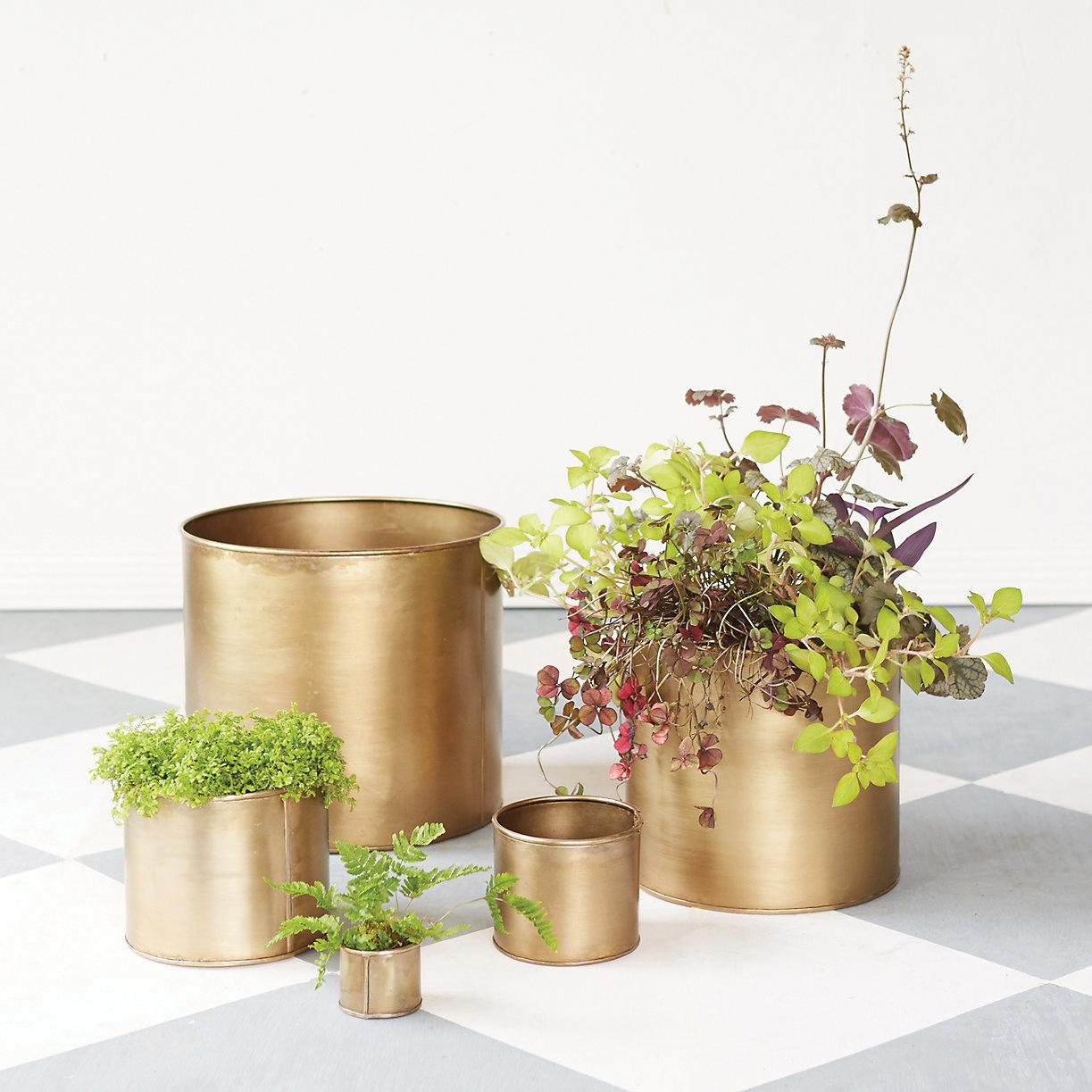 Habit + Form cylinder pots, $6-$58;   shopterrain.com