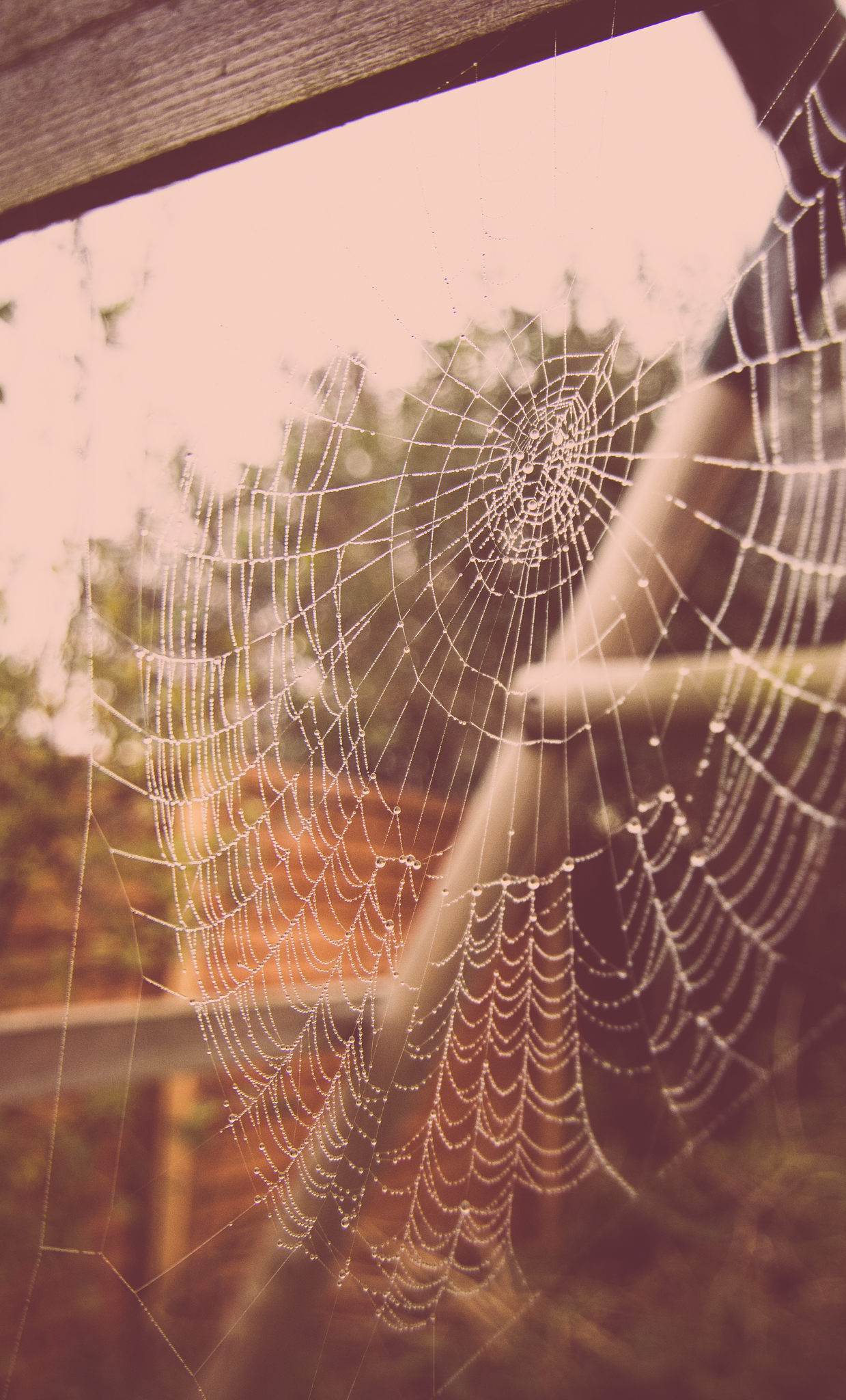 cobweb droplets