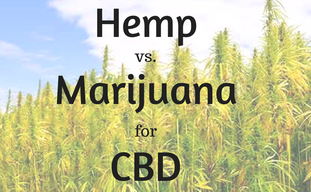 "Quick Definition : Both male 'hemp' (produces massive amounts of seed & fiber) and female 'marijuana' (produces sought after high-THC bud) come from the same ""mother"" cannabis sativa plant, as per US Dept. of Agriculture ( USDA ). Furthermore, cannabis sativa can yield a male brother – hemp – or a female sister – marijuana. Same family, different plants.     Introduction  Do you ever study interesting subjects while sweating through chores or getting things done around the yard?  It's actually one of the BEST ways to indirectly absorb information I find, as long as you don't actually need to watch what you're studying.  This little amateur walkway project in the pic below was time consuming, but fun: scoring then clearing the dirt/grass, using a stomper machine to level it, laying the sterilized playground sand, then going brick by brick by hand to where the back gate will be once my roommate moves his tiny-home chunks to their new destination (there's half on the right and left).     Sorry about getting my dirty toes in there.  What have I been studying?  The complex science of how to grow marijuana indoors. But wait a sec, while going through the beginner's courses and hydroponics video playlists, I also created a nice herb garden:     Couple types of rosemary, couple types of mint, some lemon thyme in there, sage and lavender…  SO EASY!!!  And yes, I like to plant some of them in colorful pots from thrift stores. I fill them with dirt, get the plant in there, then use a hammer to lightly knock out the very bottom of the pot before planting in the garden.  I mean, I had to create the simple box with wood laying around, fill it with spare soil – nothing store/nursery bought – get the soil relatively clean, spruce it up with some garden mix on the top…boom.  Almost as much a cakewalk to build as my new emerging strawberry garden…     Is it even possible to fail at cooking herb and strawberry gardening?  Marijuana on the other hand, you've got to be kidding me…the complexity levels around this particular type of cannabis blew my mind.  I've been smoking the buds since the early 90's and had…no…clue. Growing the stuff during prohibition was always way too risky for my blood.  After hours and hours of listening to videos while working I think I got the basics, but my goodness, I didn't even scratch the surface when it comes to cross-breeding, organic chemistry and everything that goes into strains with amazing cannabinoid profiles, or strains that mimic industrial hemp with minuscule amounts of THC and plenty of CBD. Whoa, then there's all the cannabinoid science focusing on the chemicals found in the trichomes on marijuana buds.  I think I'll run out of house projects WAY before I understand a 10th of what you can do with marijuana plants. And that's just the indoor stuff, I didn't even start on the sativa strains that can easily grow outdoors in hotter climates – extravagantly different environmental conditions vs. indoor grows.  Hemp on the other hand, well, it's an industrial plant that's typically grown on a wide scale outdoors for stalk & seed for primarily textiles and food. And hemp grows like a weed, within months being taller than myself (I'm a hair over 5'9'' in a nice pair of Allen Edmonds dress boots) without much of any help from farmers or fertilizers.  Hemp needs almost no pesticides or herbicides either, and less water than marijuana requires.  Long story short…here's what you need to know.     CBD is CBD   Whether produced by a brilliant marijuana farming wizard, or by an industrial hemp strain growing wild on the side of the road, cannabidiol is cannabidiol.   Simple enough.  We won't confuse that fact with the 'entourage effect' (more on this in a moment) and always remain mindful of how many other chemicals are involved with marijuana whole-plant extracts. To get your CBD from marijuana means you typically get it with a robust variety of interesting phytocannabinoid, terpene, stilbene, and flavonoid profiles.  With industrial hemp, these profiles are dramatically streamlined – tiny amounts of THC, far less terpenes, less flavonoids, and other chemicals, but much higher levels of CBD.  It's important to wonder, why does the industrial hemp plant make so much more CBD and less THC?  For an idea, consider these quick facts about hemp:  The fibers it creates can be stronger than steel.  Again, the plant creates this protective shield in record time without the need of fertilizers, herbicides, pesticides, and less water than marijuana or even cotton.  The plant is so strong is has been used to clean up toxic, even radioactive soil.  Hemp produces 250% more fiber than cotton.  Hemp's 77% cellulose content naturally doesn't require toxic chemicals such as dioxins and chloroforms to make paper – produces four times per acre as trees.  You can grow it, continuously, in the same place for decades with negligible soil depletion.  I could go on and on here. We're talking about the KING of plants on earth folks, and yet there are some who would like you to believe its CBD-dominant chemical makeup is somehow inferior to marijuana's.  Preposterous!  I'm a fan or marijuana and my respect for the plant and farmers continues to grow, but come on, hemp is FAR superior in every way but one – it doesn't produce such florid THC-dominant chemical profiles.  Regardless…     The Body Can't Tell   The human endocannabinoid system (ECS) doesn't care, and can't recognize whether the product has CBD from hemp or marijuana.   Your ECS is already producing a chemical that's an EXACT replica – mimetic – of CBD, the modified name is 2-AG (2-arachidonoyl glycerol). So, whether you ingest a couple drops of a  Full-Spectrum Hemp Oil  or a marijuana cookie with 25mg of CBD and 10mg THC, it's supplemental.  Your body already produces both, and your brain and organs are covered with cannabinoid receptors. Yes, they're actually called cannabinoid receptors (CB1 and CB2).  For example, you know what essential and non-essential amino acids are. If our bodies already make them, they're non-essential, although we need them to survive… you get the idea – alanine, arginine, glutamine, etc.  There's 11 of them.  CBD is like that, it's non-essential in that your body is already creating 2-AG (an endocannabinoid) and it's present within your central nervous system. Hemp and marijuana – cannabis plants –  simply provide plant-based supplementation to compliment two of your body's endocannabinoids:   Anandamide : this is your body's equivalent of THC.   2-AG : the body's own CBD.  Weird right, who started creating them first, us or them? And how or when did they converge way back in evolutionary history?  Hopefully this makes more sense as to why pertaining to CBD, for the ECS it doesn't matter which plant it comes from.     The Bioaccumulation Argument   We always hear about hemp being a bioaccumulator with a negative connotation, guess what – all cannabis plants are by definition bioaccumulators, along with TONS of other plants.   It's called phytoremediation – the ability of plants to uptake certain things from the soil they're roots are dug into.  Did you know Japanese residents around the Fukushima disaster began planting sunflowers by the millions, along with field mustard and amaranth to help clean up the toxic cesium and other toxins from the soil?  All over the world, right now, plants are being put into the soil to leverage the process of phytoremediation. Hemp's been heavily studied in this respect, and we know of its ability to absorb cadmium, chromium and nickel from soil, and that  high concentrations of these heavy metals have little effect on plant morphology .  Folks, don't worry, the chances your hemp extract or high-CBD product will come from hemp grown around toxic waste dumps or plants is near non-existent! Even then, if hemp can power through radioactive particles and absorb insane amounts of sun radiation without being harmed at the same time…  Sounds like plant super powers to me!  On the other side of that coin though, after everything I've learned about growing marijuana, I'm that much happier with legalization and state/local-level regulation of farming, producing and packaging. However, that's not to say marijuana growers aren't being caught using hazardous stuff to aim for higher crop yields, and more elaborate cannabinoid percentages. Regulation just dramatically lowers the chances. Here in my city, what do you think would happen to a marijuana grower with a presence in dispensaries (quickly becoming cultural hubs) if they got caught by all these environmental liberal stoners just once using something toxic to make a buck?  Insta-shunning.  Do not pass go, do not collect $200…it's brand-suicide. I don't follow the marijuana culture locally, so I wouldn't even hear about it. That brand and all it's crops would simply cease to exist because demand would dry up instantly.  With industrial hemp farming at this point, there's far less regulation. That's a fact. The VAST MAJORITY of all Hemp CBD products you can purchase online are derived from imported hemp – China, Canada, India, European nations, etc. But there's really no danger of hemp extracts being somehow dirtier because of hemp's powerful phytoremediation or bioaccumulation.  For marijuana, it's a different story. With indoor marijuana growing you can use a smorgasbord of chemicals – so cleanliness is a real factor.     The Entourage Effect Issue   From my chair here it's not an issue. It's primarily a selling point for the billion $ marijuana industry.   Personally, I don't consider cannabis (or any cannabinoid) medicine whether it's hemp or marijuana. Not in the same way we consider hydrocodone or amoxicillin medicine.  Meaning, I don't think cannabis is something a doctor and only a doctor should be able to 'prescribe' to you.  Why? Well, because that puts too much power into the hands of government and corporate interests who currently control anything clinically deemed 'medicine.'  It's herbal supplementation, of again, chemicals the body already creates.  The crux of the issue can be summarized by this question,   "" Is CBD from hemp ideal, or is it more effective when used/taken as part of a natural range of whole-plant marijuana cannabinoids, terpenes, flavonoids, and so forth? ""   The argument is, well, because marijuana has such a complex mixture of chemicals, you can make it smell like orange sherbet, cannabinoids like THC or CBD can be bred to be so potent, as well as concentrated terpenes (strawberry gumball bud anyone?) it must be better.  More often than not, anyone making this argument is either selling something or being paid to say it.  I understand what's meant by the idea cannabinoids perform better as a group; that they need each other symbiotically to 'work' in both the plants and in the human ECS.  BUT, the question is, how much? Marijuana proponents always seem to combine the entourage effect argument with products that have huge and extremely complex chemical ranges.  And make no mistake, industrial hemp extract has its own entourage effect.   Whole plant hemp extracts ARE NOT the same as CBD isolates!    Isolates : single-cannabinoid, made in a lab with machines.   Full Spectrum Extracts : concentrates of natural plant resin & oils.  Just imagine what the information battles will be like for the hearts and minds of Americans once industrial hemp farming is re-legalized and cannabis PR Wars truly kick off.  A large complex variety of human health issues exist where marijuana, and thus higher THC/terpene percentages, and dynamic chemical profiles are more effective. These can differ from one person to the next. In essence, the more complex the function, the more cannabis 'power' is needed.  There's also an equally large and inter-related web of issues where minute amounts (making them legal under current federal laws) of THC, with a more streamlined CBD-dominant chemical profiles makes more sense. Remember, think of the power of the plant and how it grows, and why it creates the chemical profiles it does.  If CBD is the primary sought-after cannabinoid, and larger percentages of THC aren't desired or needed for whatever reason, hemp is the ONLY other plant-based source.  Only.  At this point in time, there's no other plant species in the universe I've heard of where you can get the types of extracts provided by marijuana and hemp designed through nature herself to work seamlessly in the human ECS.  I love marijuana, but, I love hemp – two branches of one tree.     It Comes Down To You   CBD doesn't catalyze into our cells without THC.   When you REALLY dig into the science, you see that for the most part, on the molecular level the entourage effect is real. They perform their functions within the ECS as a team, in conjunction with hundreds of other chemicals.  You need some THC, but again, how much?  There is no universal answer. And I don't care what any conventional or marijuana industry studies say – the anecdotal evidence is clear and has been mounting for years (in reality, for MILLENNIA).  One person will see better results with these strains of marijuana, in edible form, for this specific health issue or that, while the person standing next to them will swear by hemp extracts only because of X and Y.  I'm a writer and researcher, trust me, for every comment under cannabinoid science-related articles exclaiming ""Marijuana trumps hemp!"", there's someone right below it like Emmanuel here:     He's right about those strains being high-CBD low THC, I've tried both myself here in Washington State. And he reminds me yet again of how confused I was after all those hours of listening to people go on and on about how to grow marijuana indoors.  Which leads me back to the original point here folks…     For CBD from Hemp or Marijuana – Look to Farming Methods  High-THC concentration issues aside, when considering where to get your CBD from, marijuana vs. hemp, just look to the farming methods. The more you learn about how these two plants are farmed, the more you'll understand in terms of the 'quality' of your end-product – edible, capsule, concentrate, etc.  Hemp extracts like those for sale on  HempforFitness.com , are usually going to be nothing but the plant concentrate (some have herbal compliments) so you don't have to worry about additives or extra sugars and things. This is the #1 reason I don't buy edibles from dispensaries – they're like the cookies I wouldn't buy from supermarkets because of their ingredients, but with marijuana extracts added.  I prefer smoking buds. And, if I ever get around to growing my own marijuana, I'll make my own edibles with my own ingredients for personal use – the way I like them.  Get to Know Your Supplier Folks  About as many people who buy marijuana products from dispensaries know the farmers, as people buying cigarettes from corner stores know tobacco farmers.  Personally, as I mentioned, I've been supplementing my ECS with marijuana for over two decades and guess how many actual, real farmers I've met…zero! The neat thing about small companies like HempforFitness.com is, because you can purchase the full spectrum hemp extracts online, you can reach out and directly connect with, call, and get to know your supplier.  Until hemp farming is legalized, sources will almost exclusively remain outside the continental U.S. Even then, it'll take time to build the infrastructure necessary to start supplying all the domestic demand for hemp extracts with domestic hemp crops."