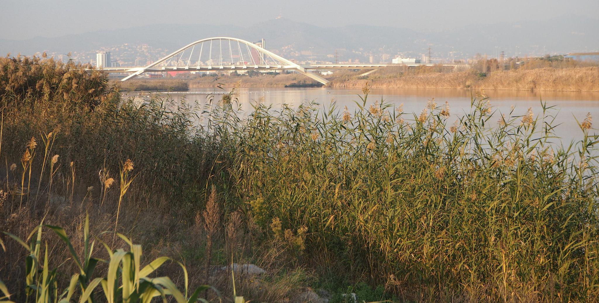Delta del río Llobregat. Foto: Teresa Grau Ros.