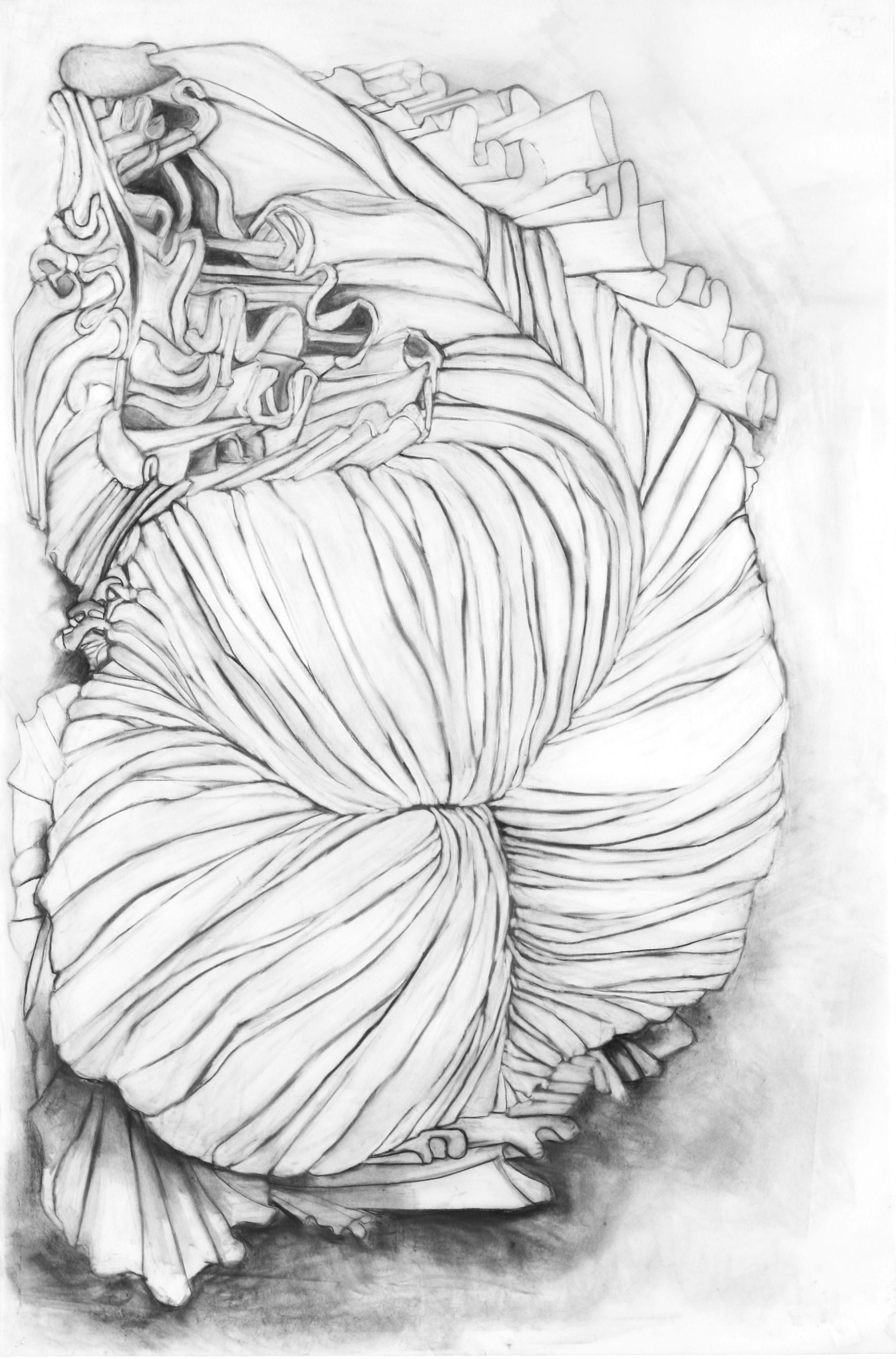 "Ruffle Study 2 36"" x 25"" charcoal on vellum"