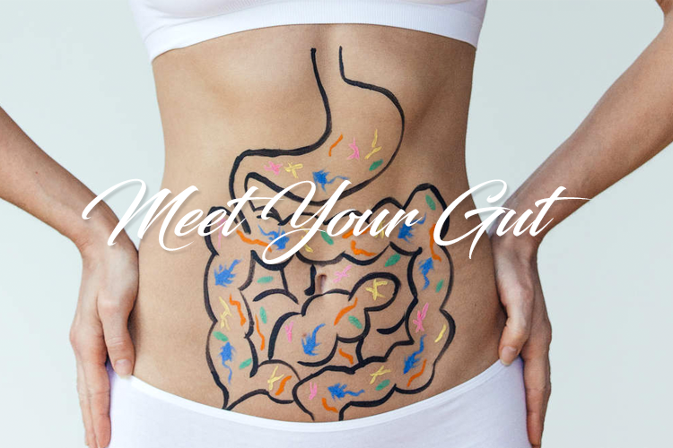 Meet Your Gut! Get to know your microbiome.