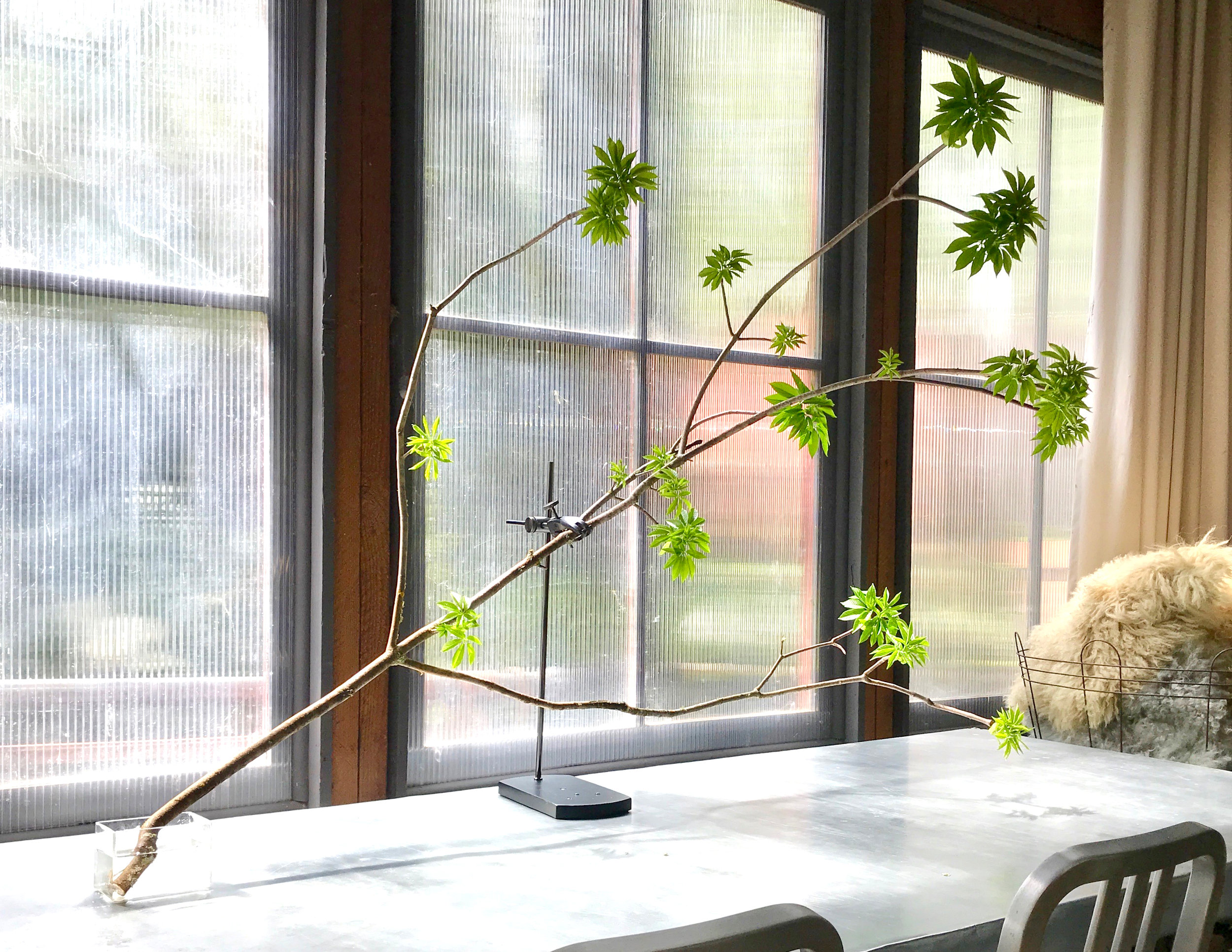 The Table Mount Featuring Budding Buckeye Tree Branch