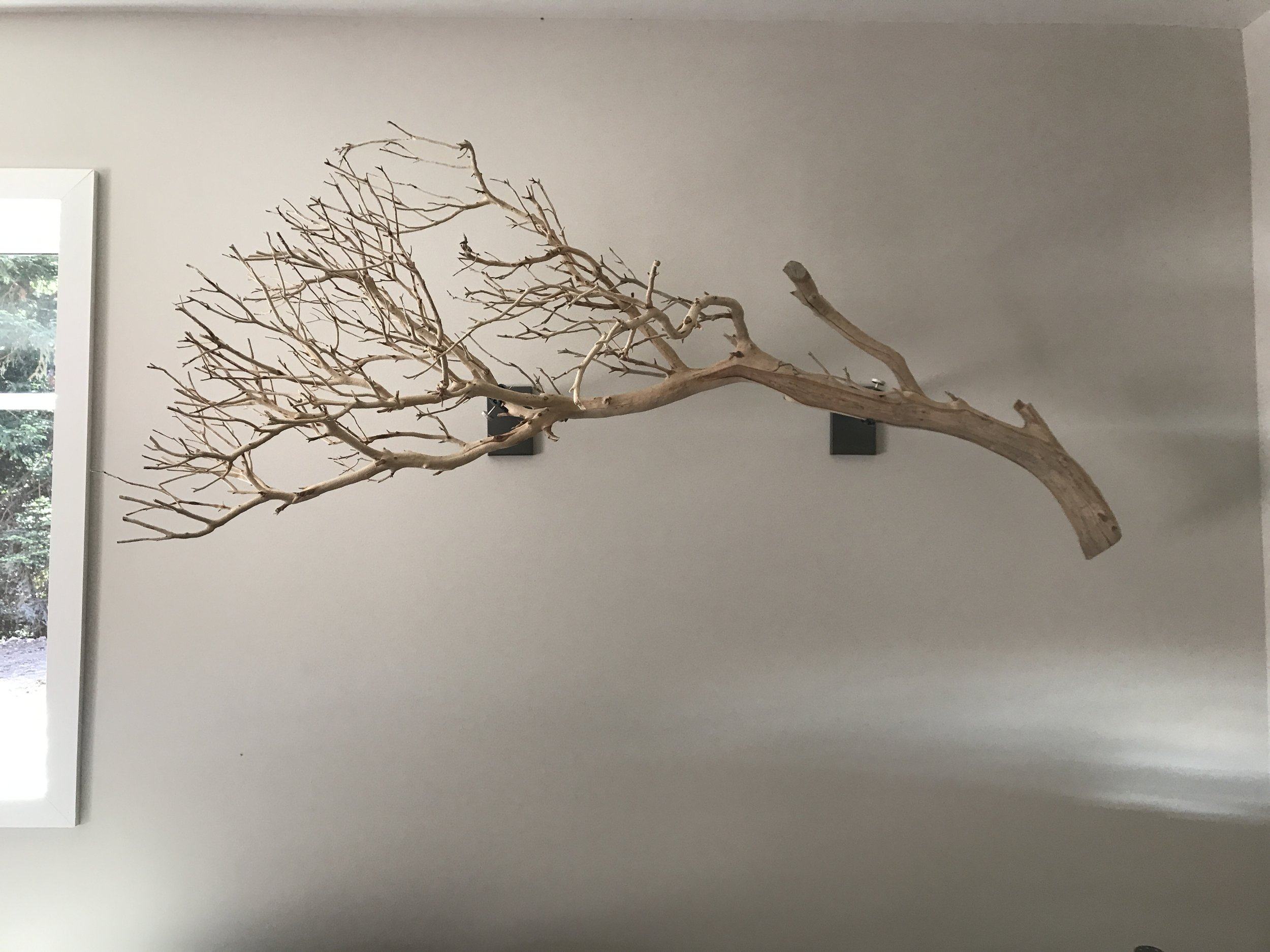 Wall Mounts with Manzanita