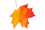 leaf2_hhsugarbush.png