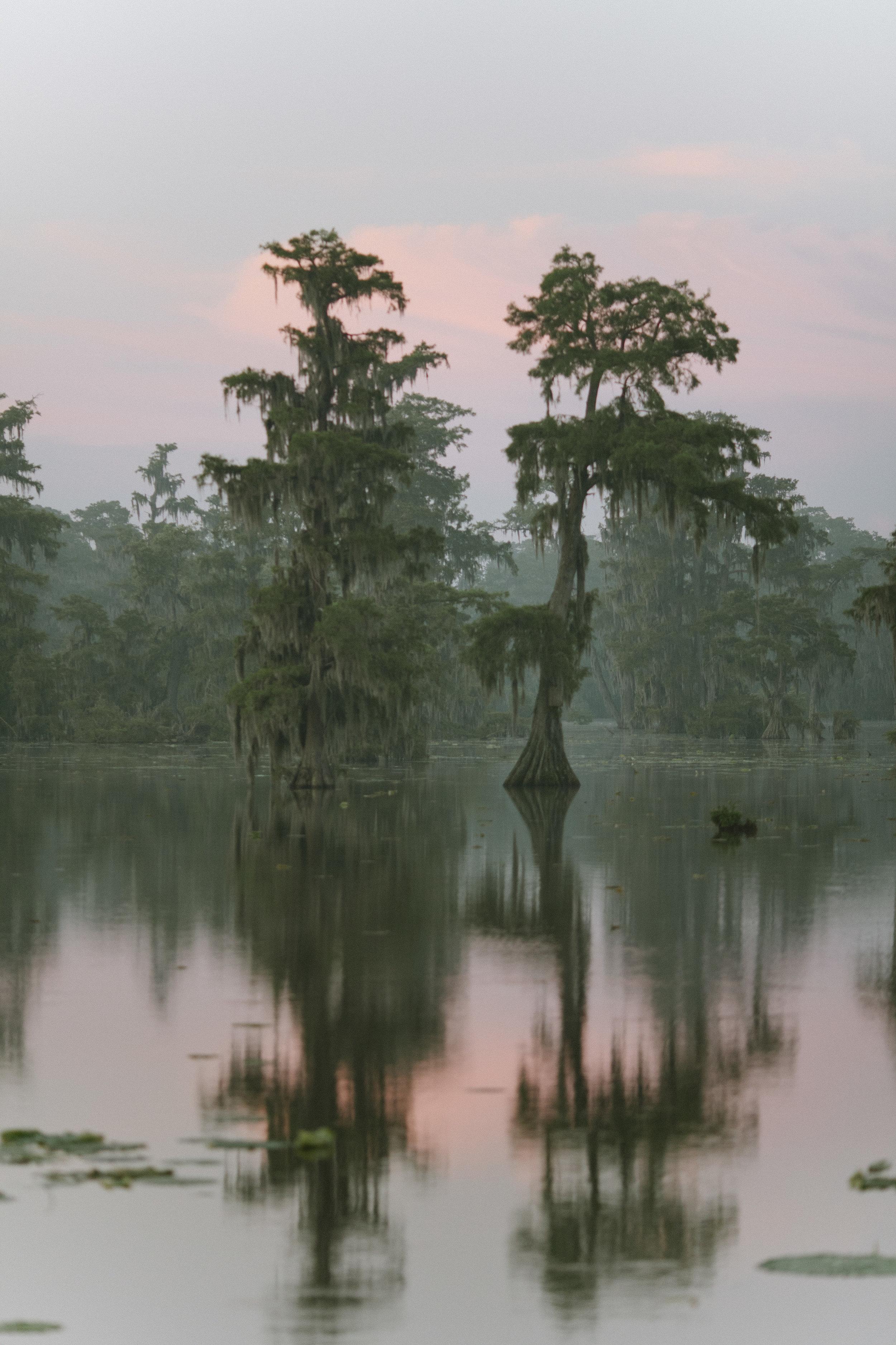 Cypress 3.jpg