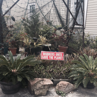 Sign in a yard in New Orleans.
