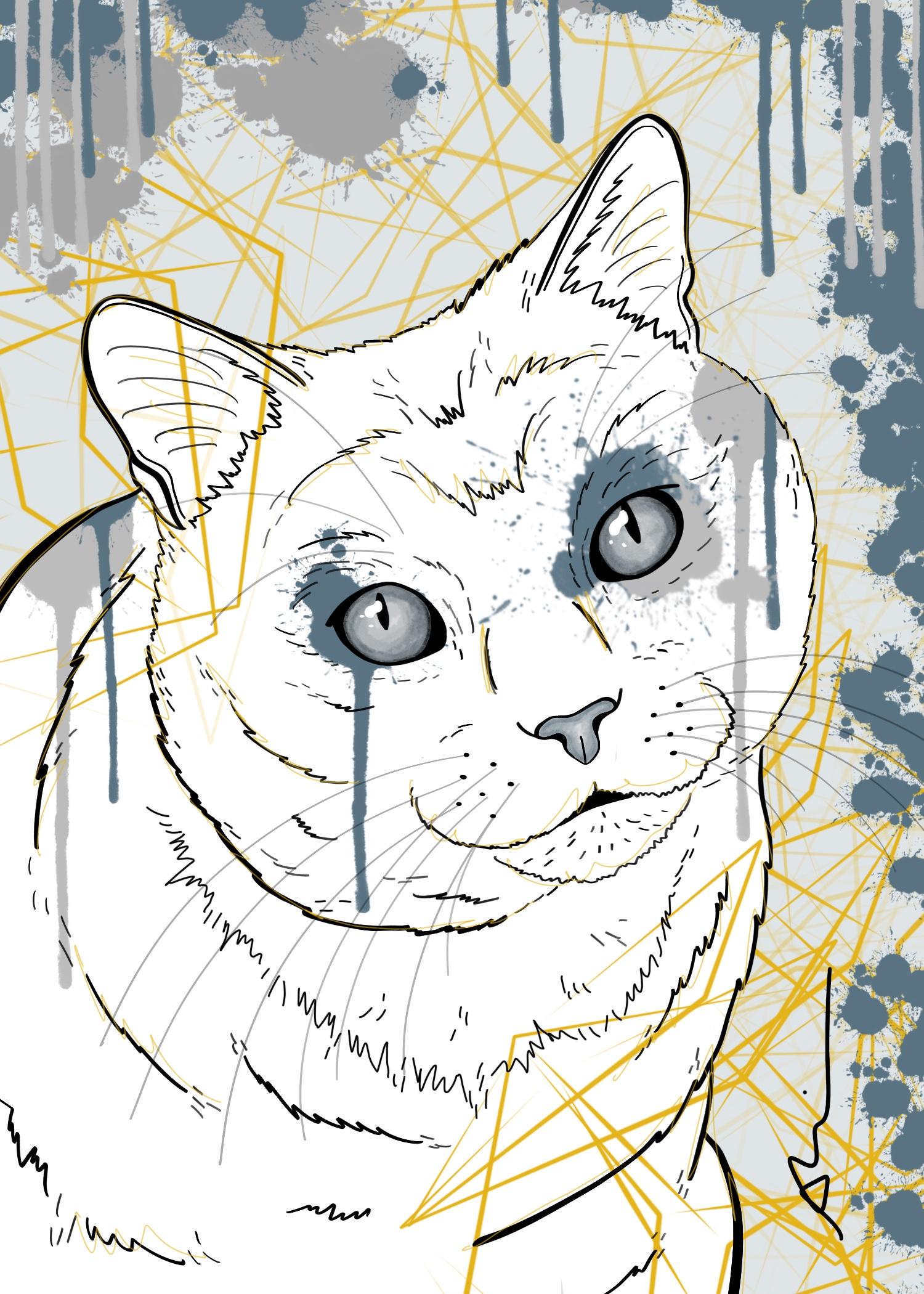 Splash Cat.jpg