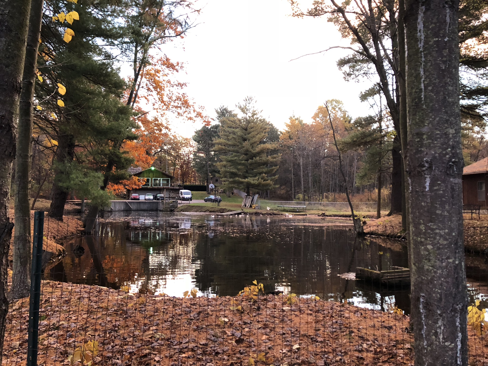 The campsite overlooks a little lake where ducks play.