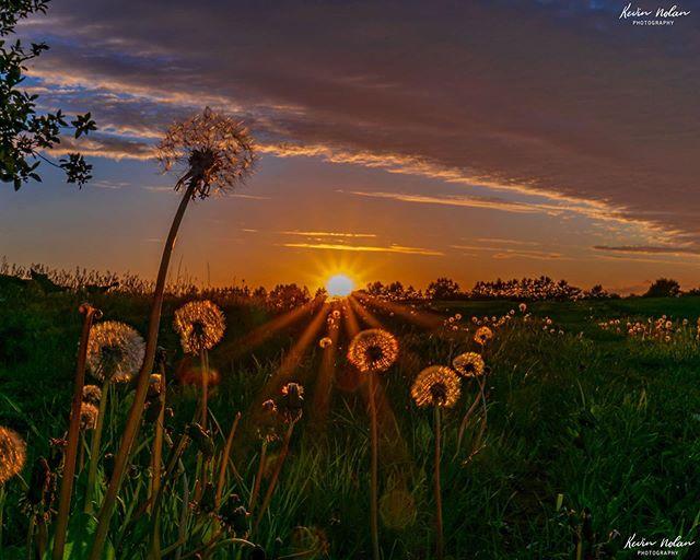 With all this rain in Dublin, I'm hoping for a return of summer sunsets like this sooner rather than later. . . . . #sunset  #killergrams  #sunsetphotography  #nikon  #houseoftones  #summer  #discoverdublin #insta_ireland  #tourismireland #visitdublin #ireland_gram #irishpassion #lovedublin #loves_ireland #lovindublin #igersdublin #igersireland #moodygrams #ireland  #Instagram #natgeo #iger  #ig_ireland  #thefullirish #raw_ireland #bestirelandpics #daily_ireland #kevinnolan76 www.kevinnolanphoto.com