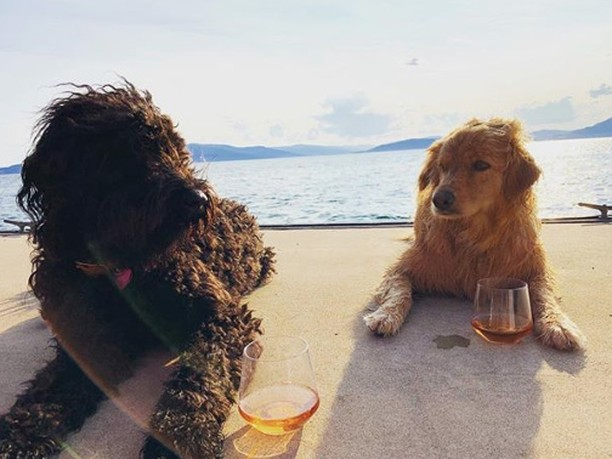 "What's better than a glass of Alsace wine? Sharing it with your best friends 🐾. - These #DogsofAlsace are guarding @lucienalbrecht's precious Cremant d'Alsace Brut Róse, which @vine_cru tastes, ""tangy strawberry and rhubarb 🍓 bright red fruits with lemon and dry."""