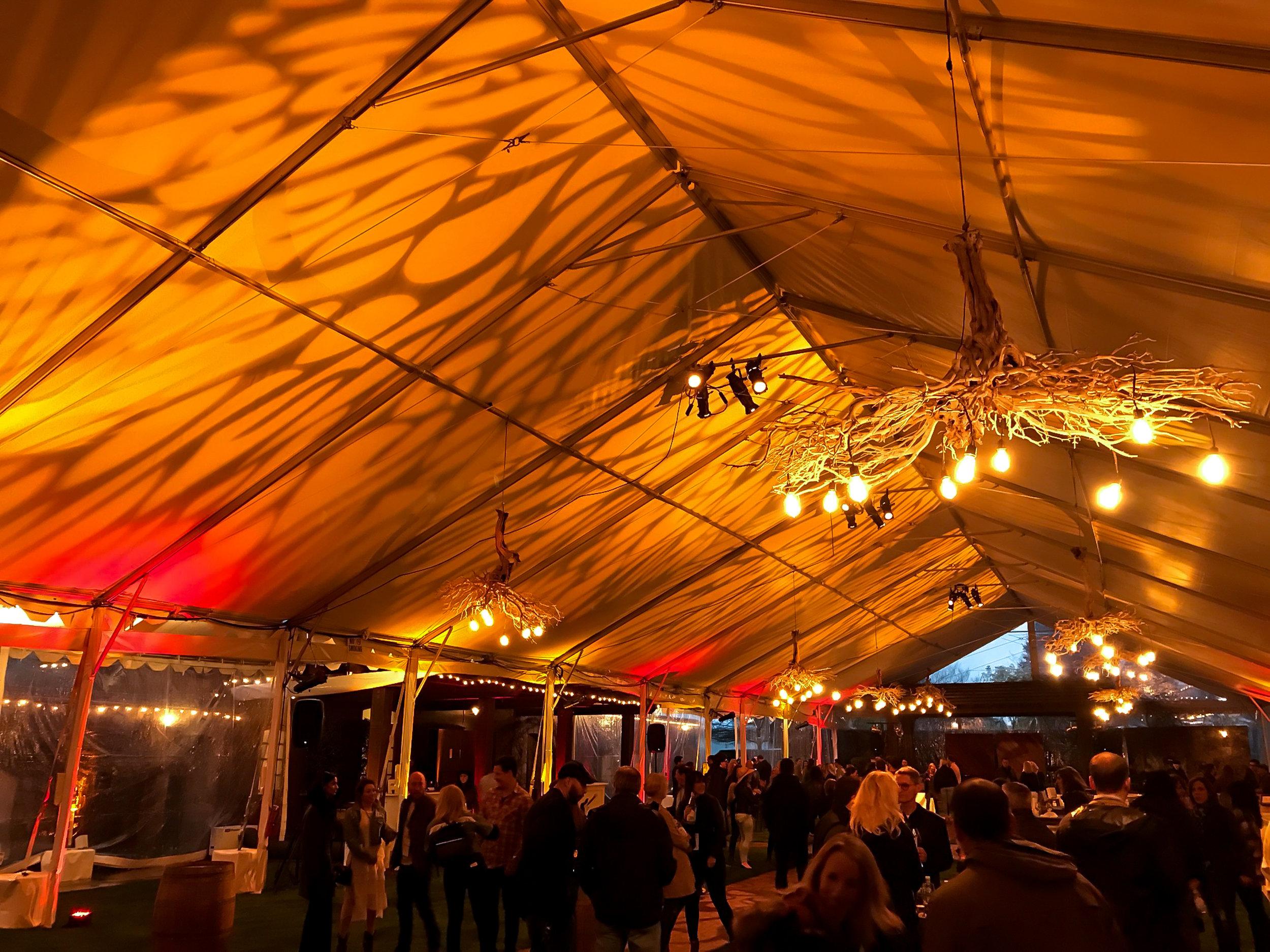 Lighting - Tent Setup - After.jpg