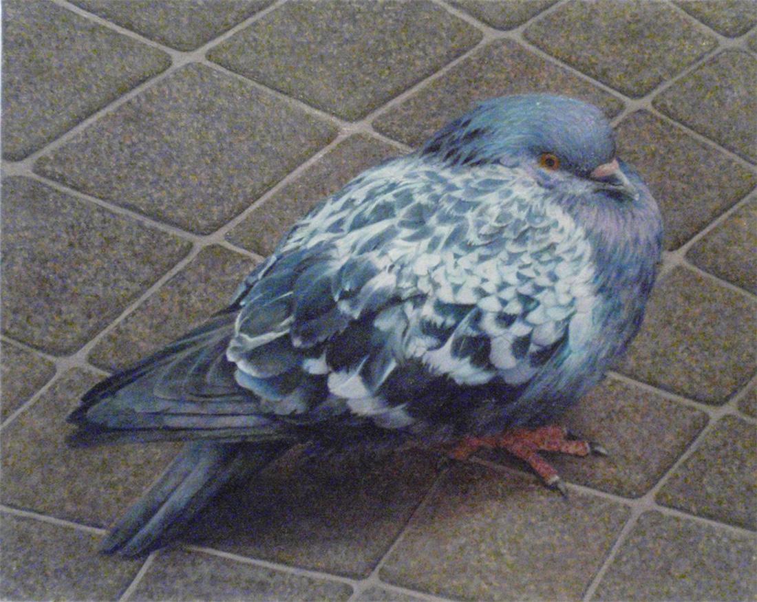 """Glasgow Pigeon""  Oil   8"" x 10"""