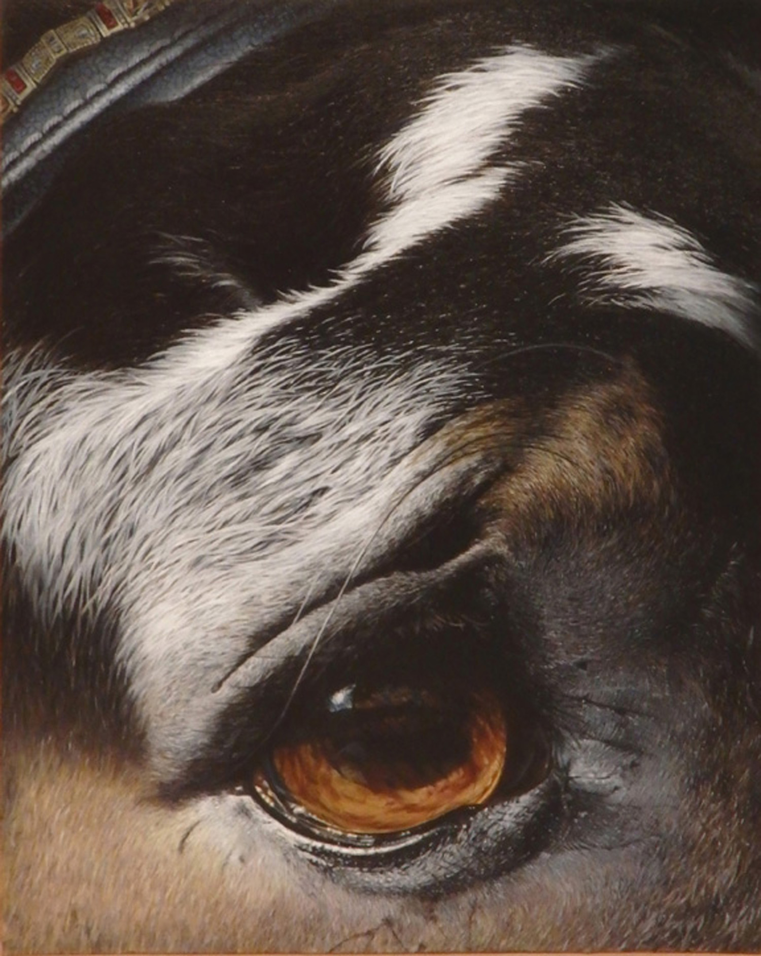 """""""Trooper""""  Oil 20""""x 16""""    (This painting appeared in the special section on animal art in Fine Art Connoisseur's July 2018 issue.)"""