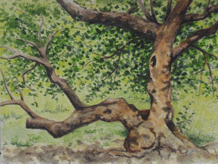 """Cherry Tree Near Bethesda Fountain""    Watercolor 4 1/2"" ""x 6 1/8"""
