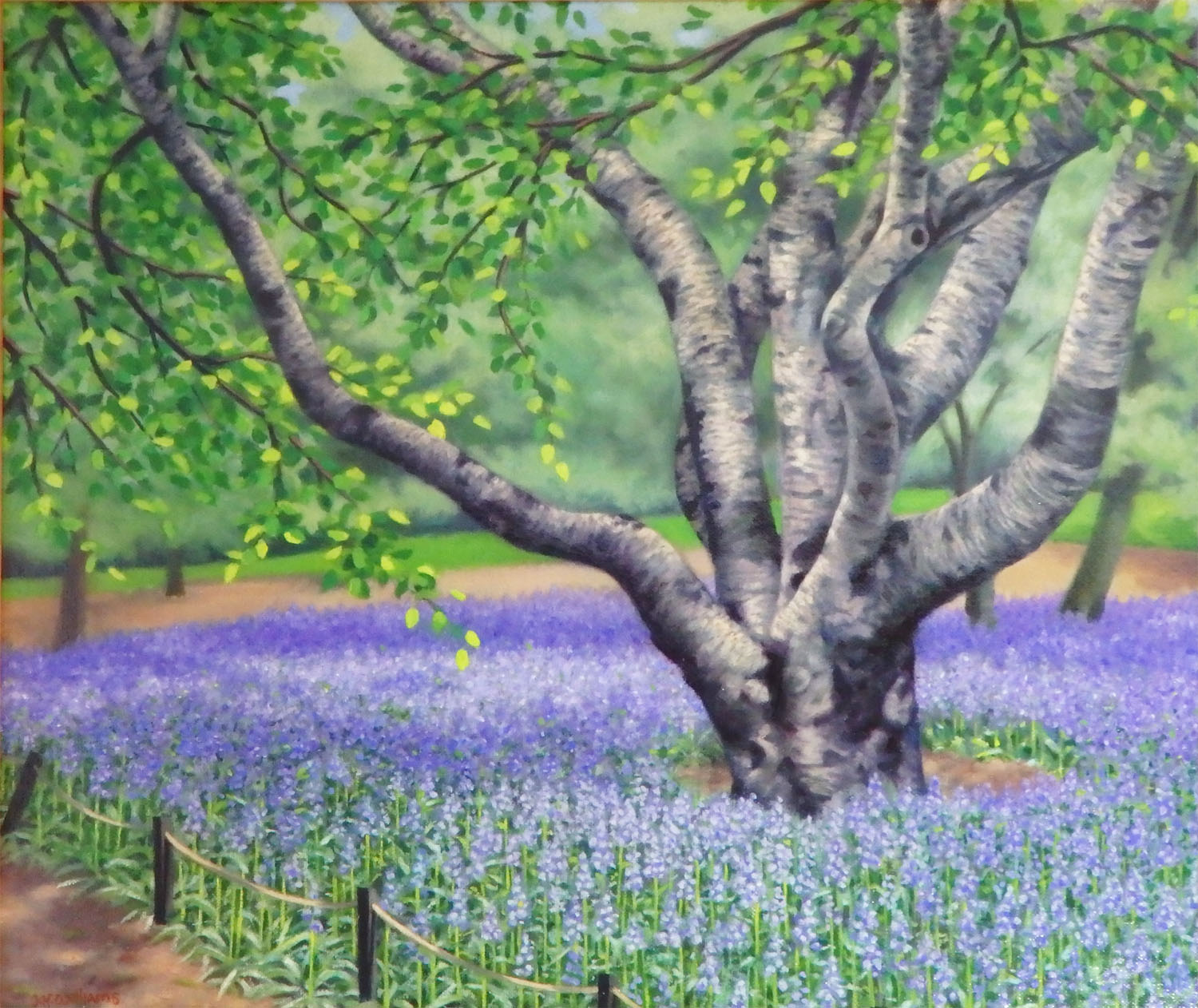 """""""Paper Birch and Bluebells""""    Oil 14"""" x 16"""" Also available as a reproduction."""