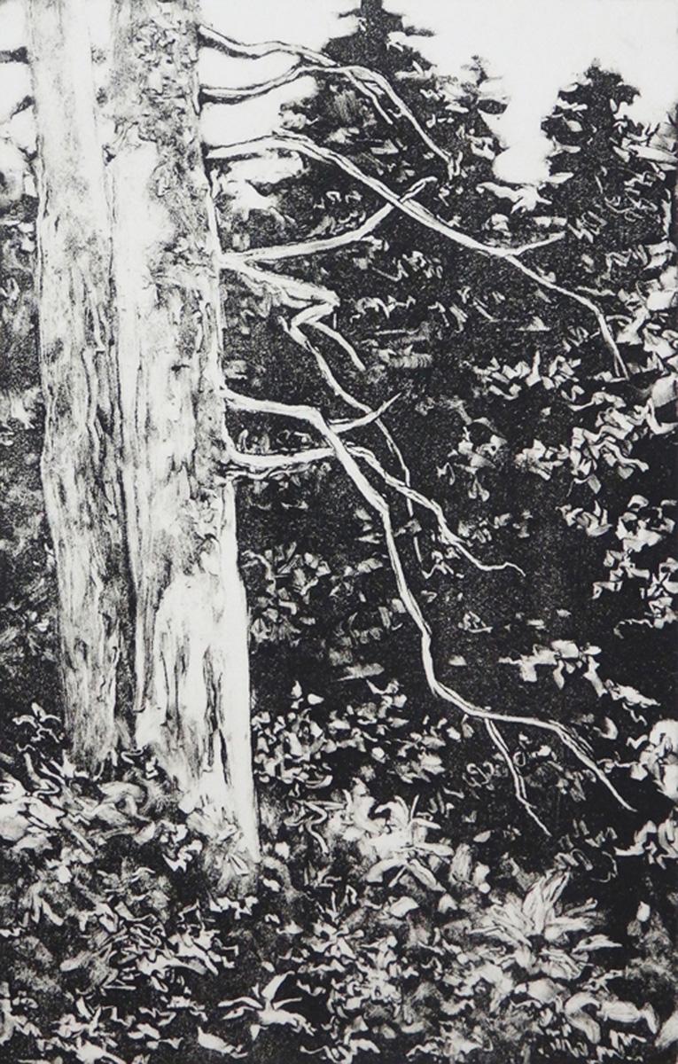 """Tree in Yellowstone""    Monotype  6"" x 4"""