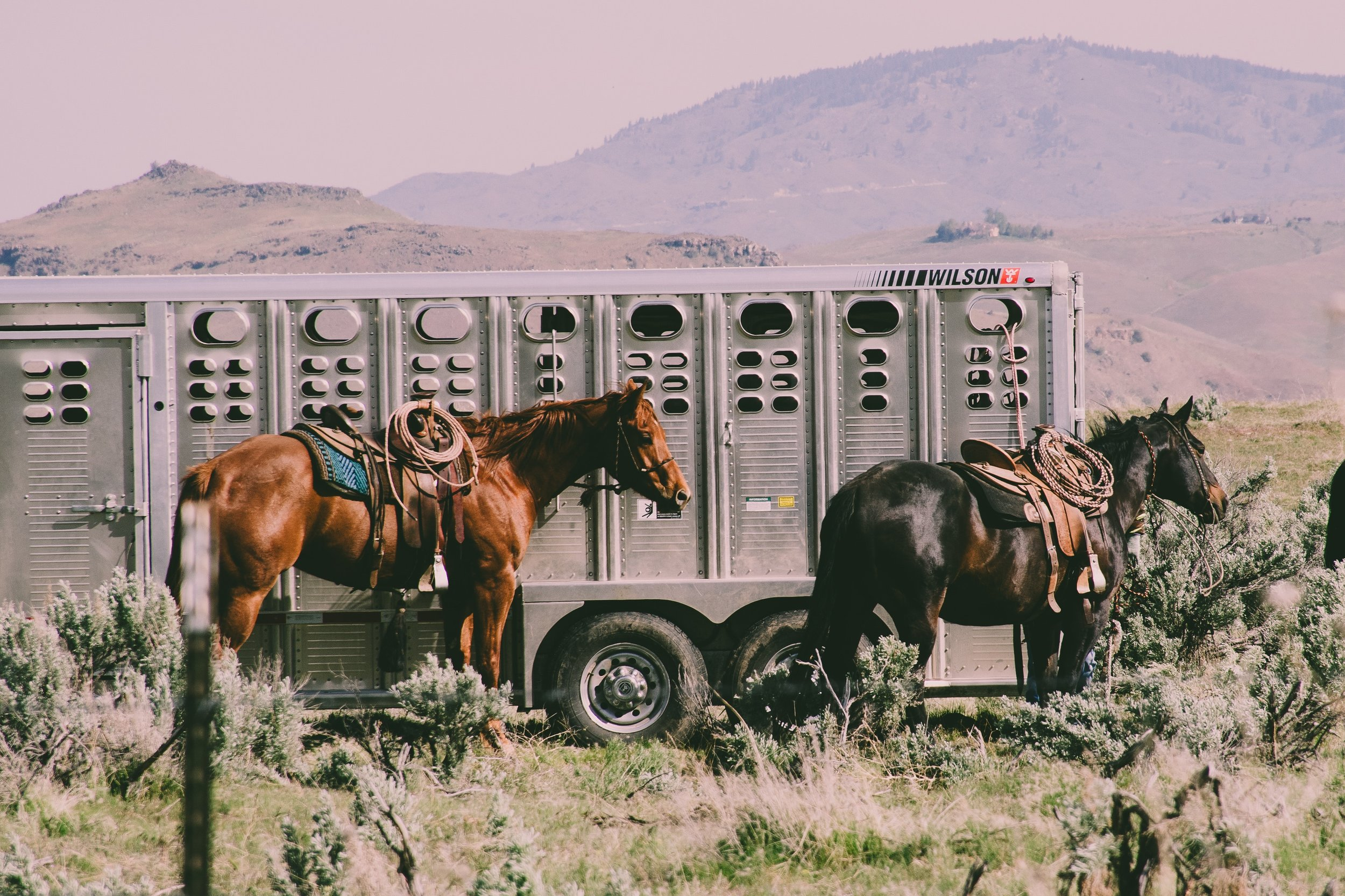 animal-animals-cattle-1069722 (1).jpg