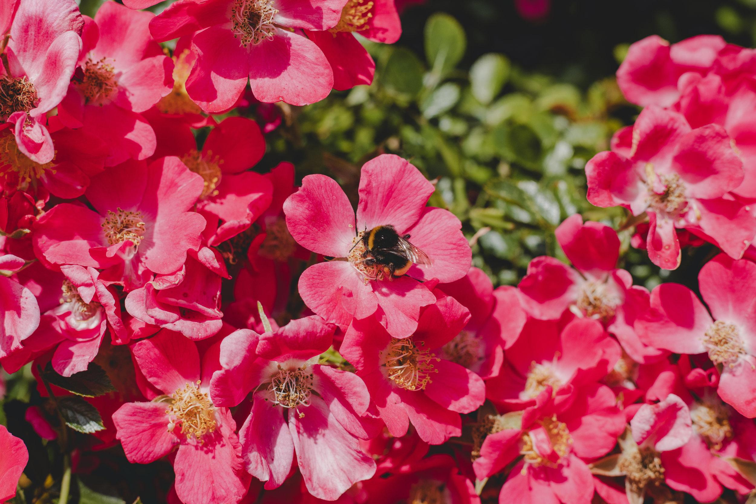 Bee Snapshot