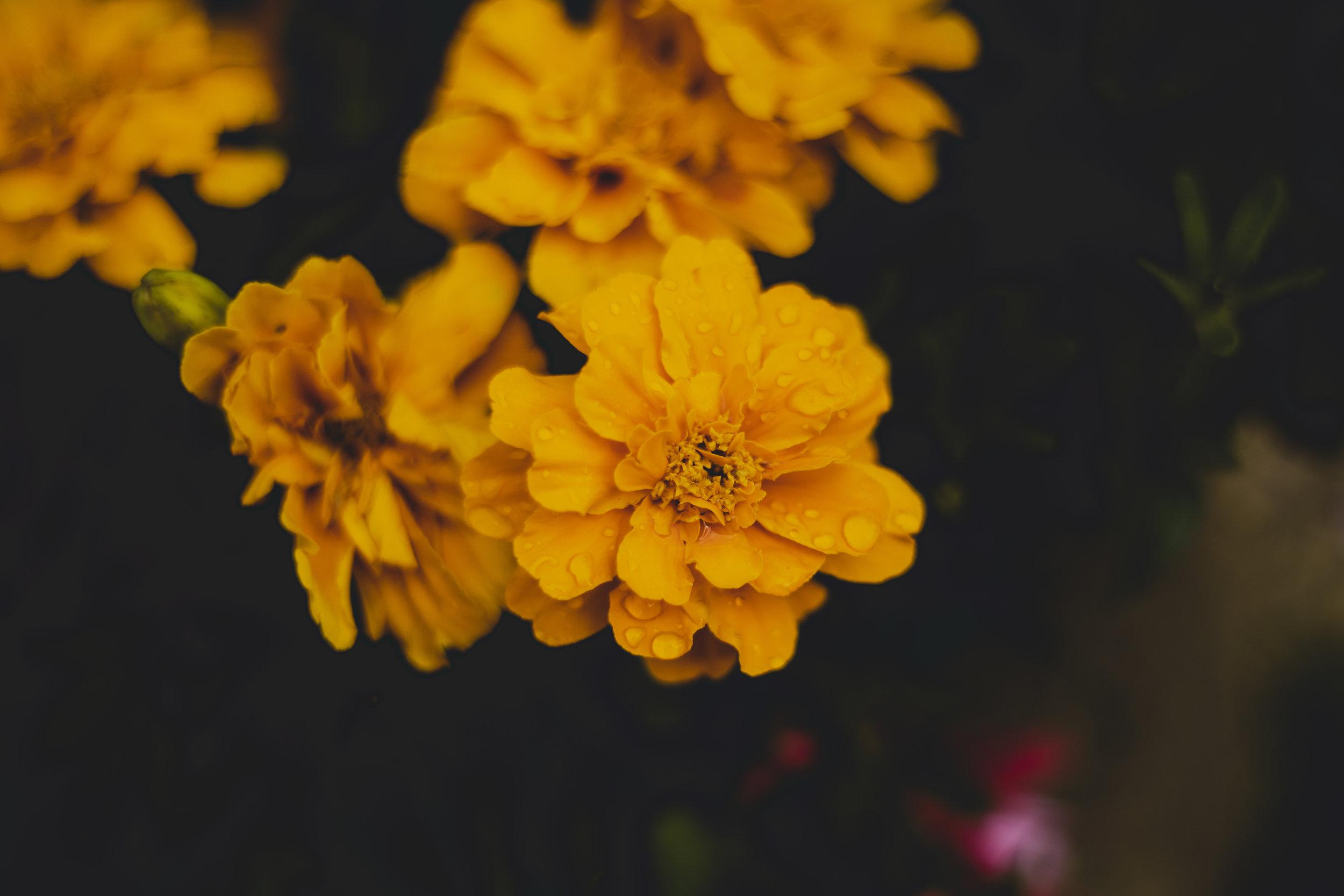 Yellow feels like home