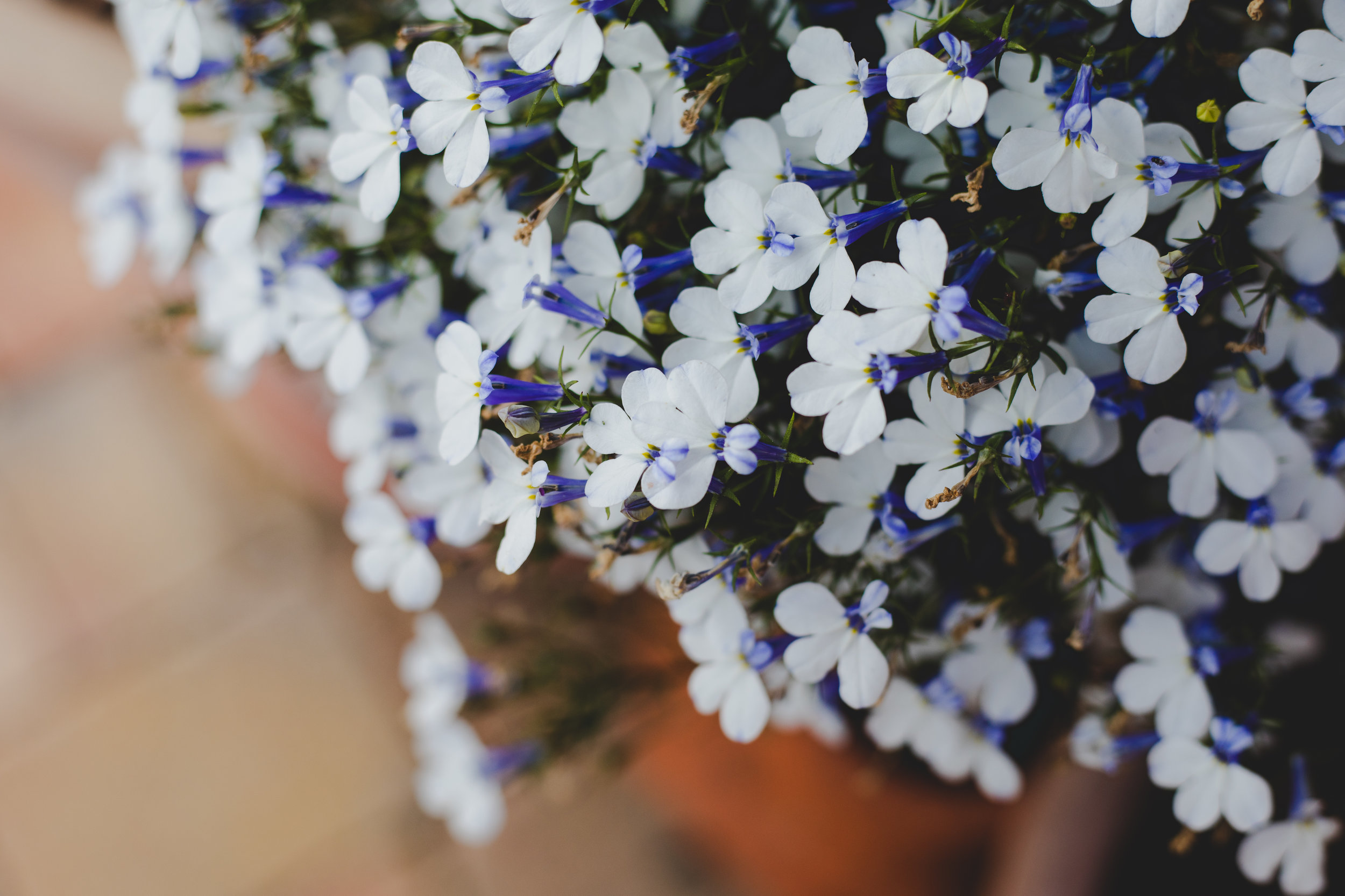 A sprinkle of blue and white