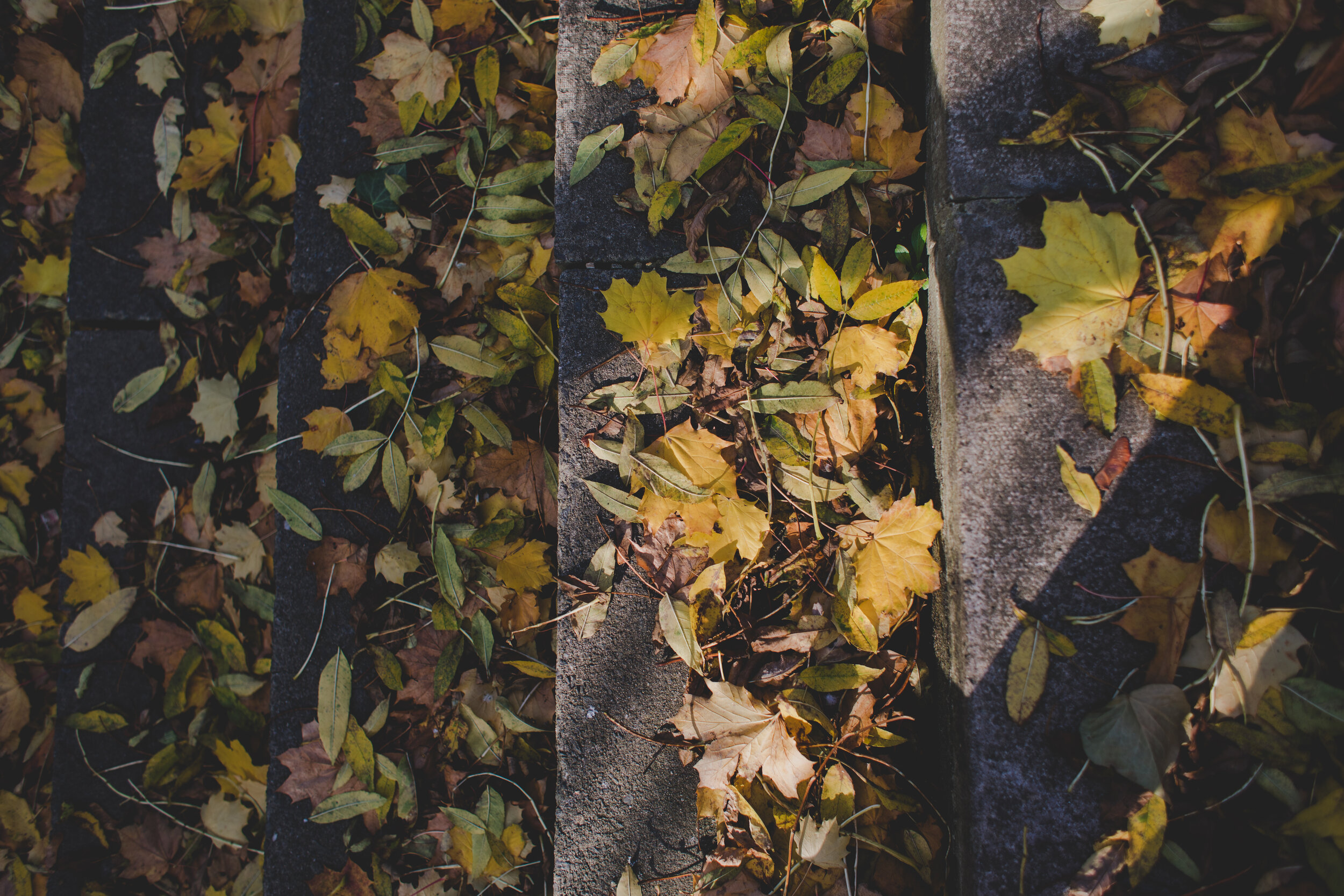 Yellow leaves on concrete steps