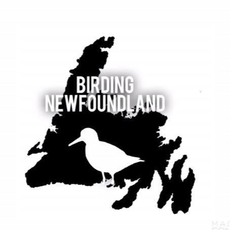 birding newfoundland logo.jpg