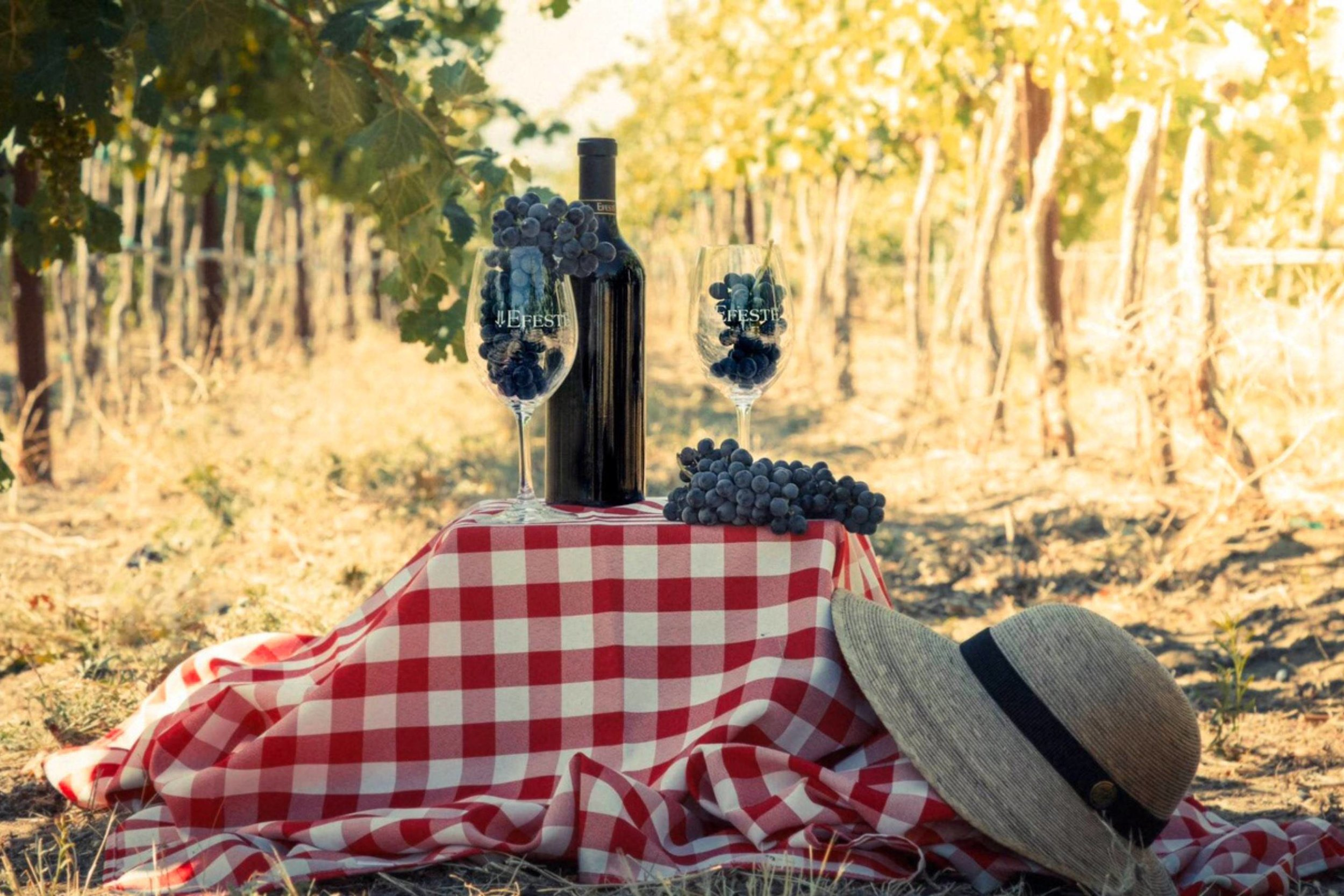Vineyard Picnic.jpg