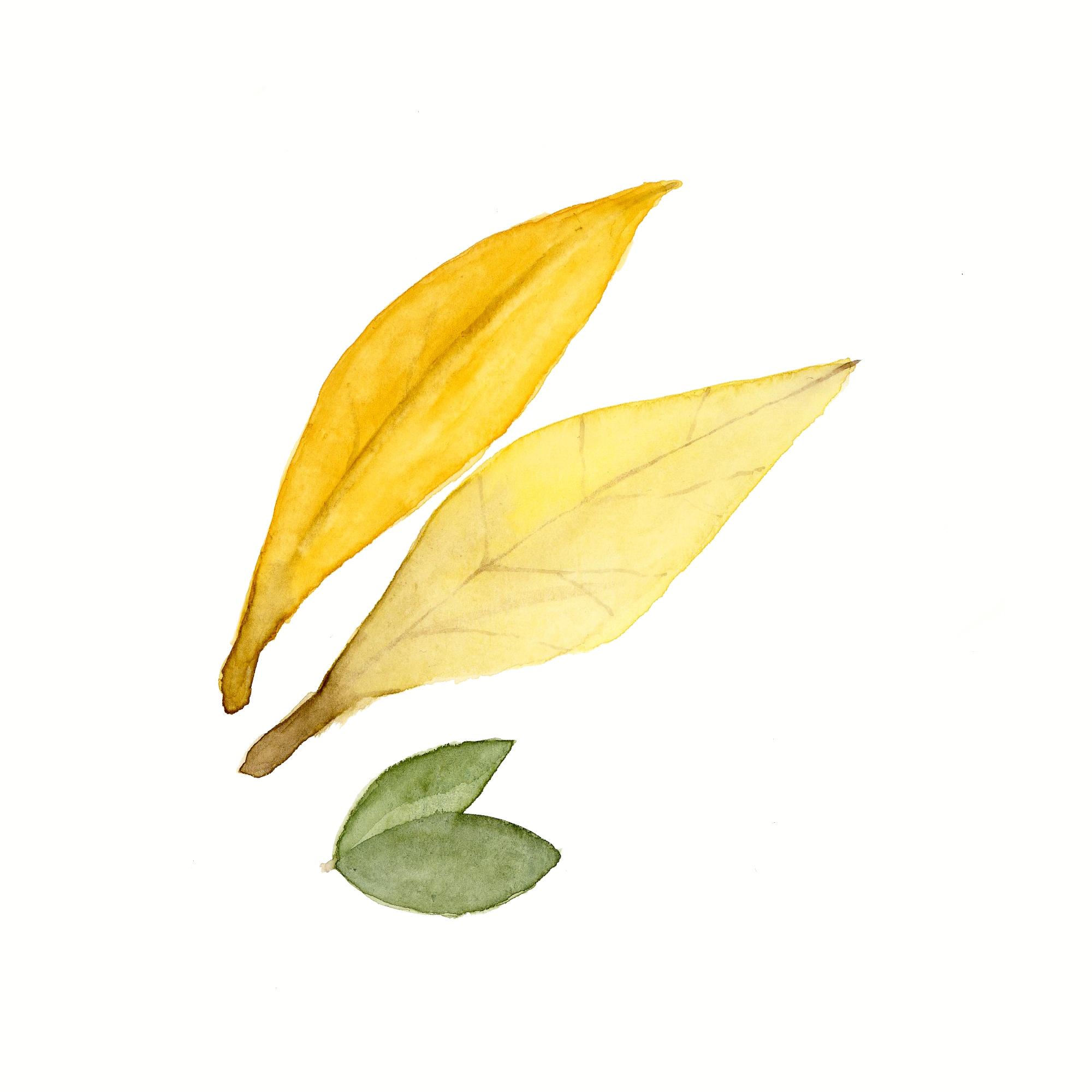 Leaves001.jpg