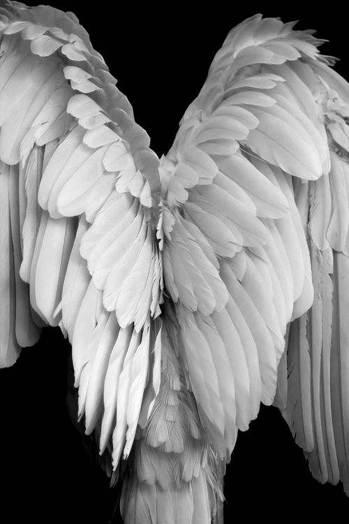 Angel Wings 1.jpg