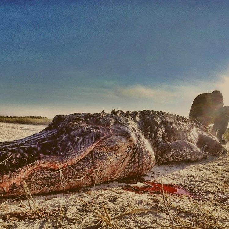 bco_hunting_alligator_v1.png