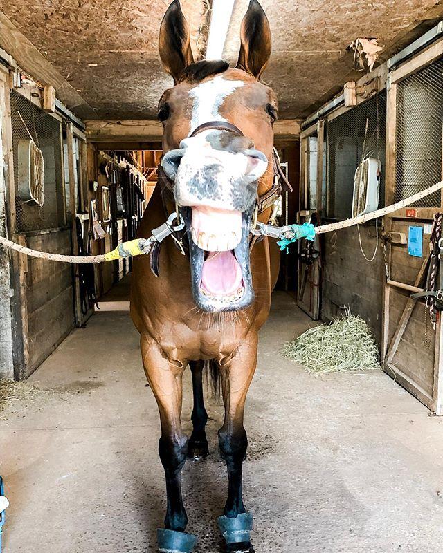 😂 This horse is my ✨spirit animal✨