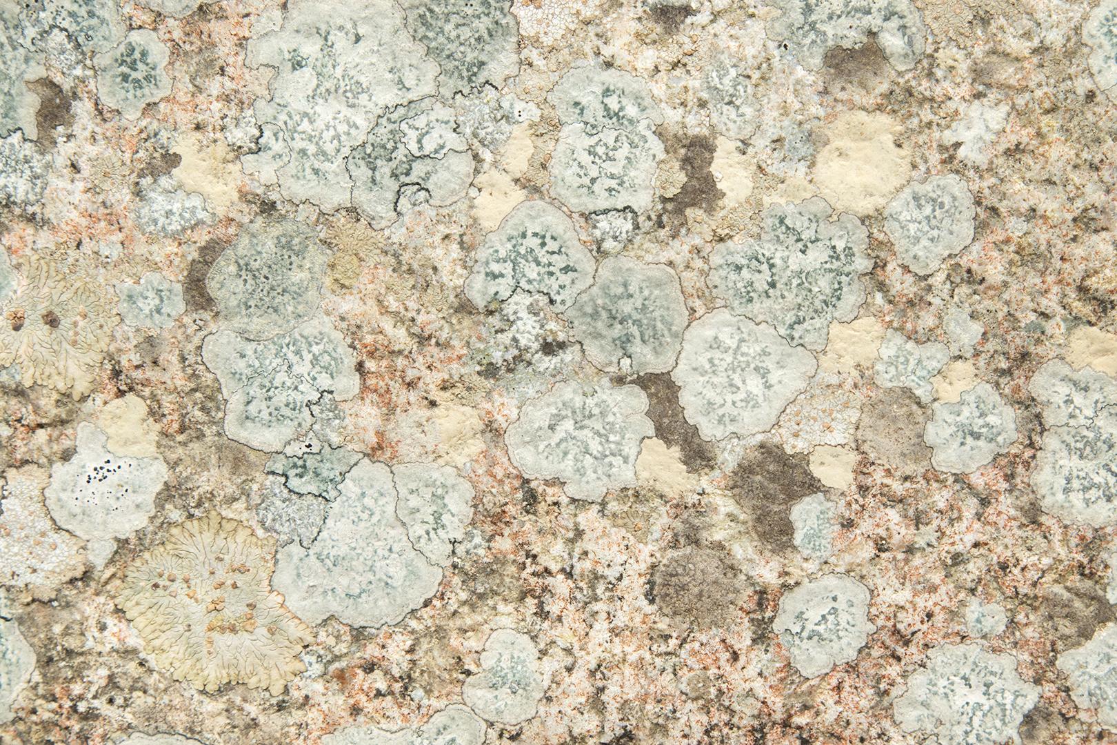 Wallpaper lichen