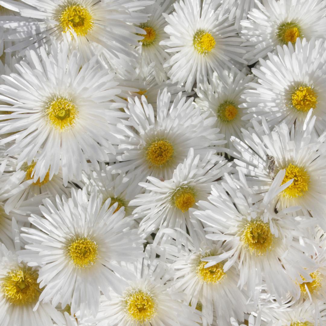 Wildflower happiness