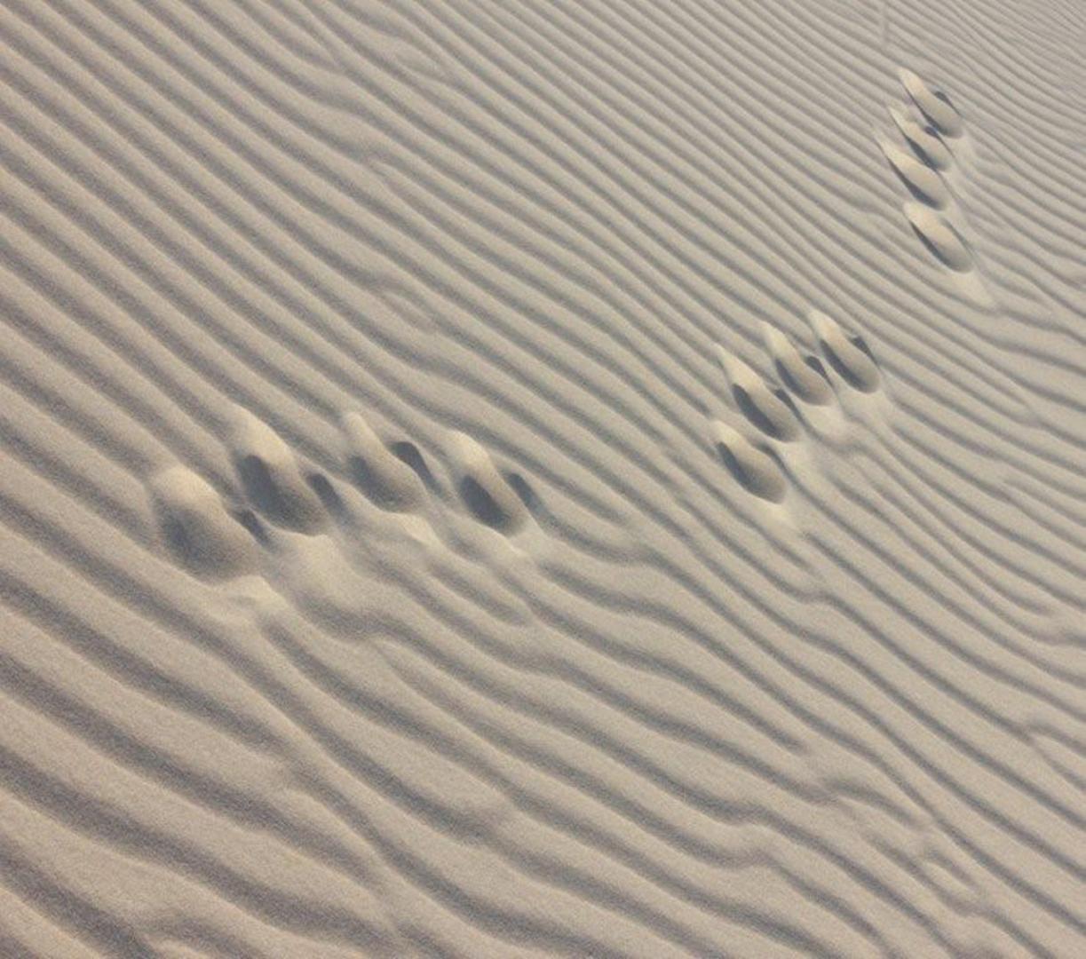 Footprints