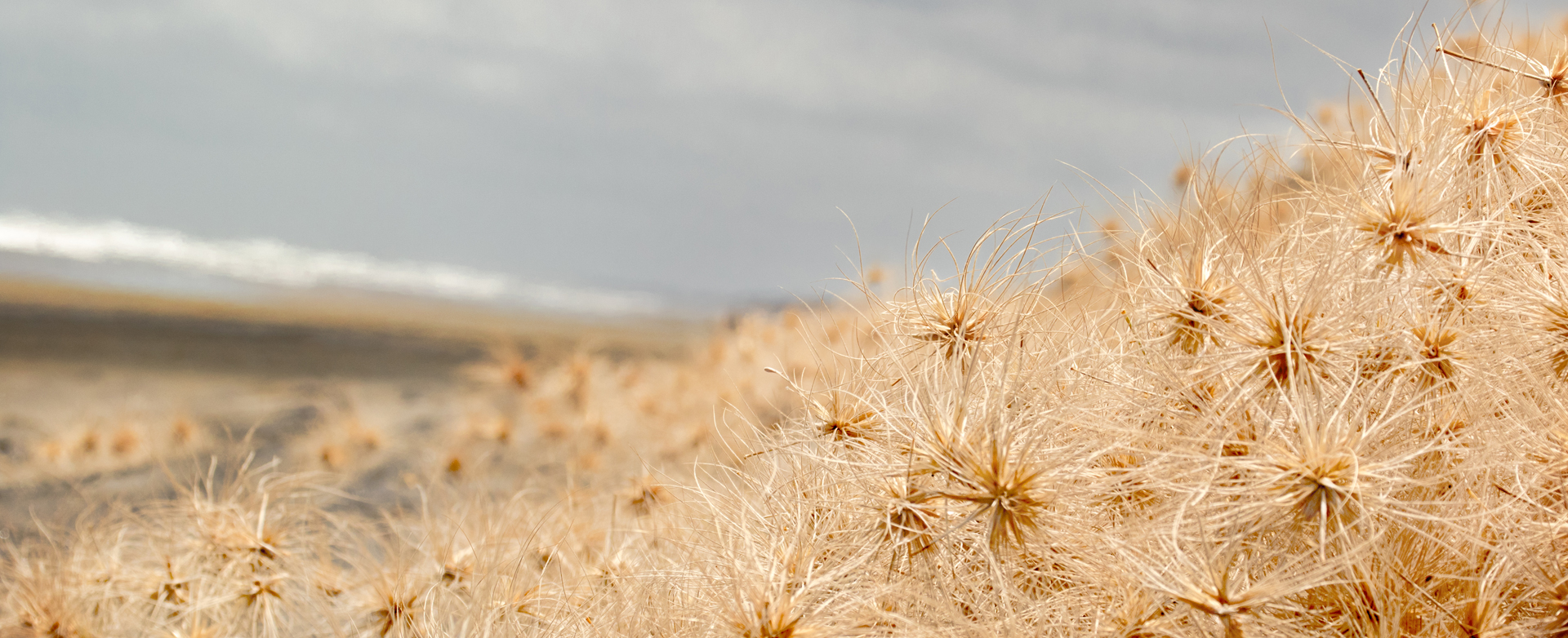 Tons of Tumble weeds
