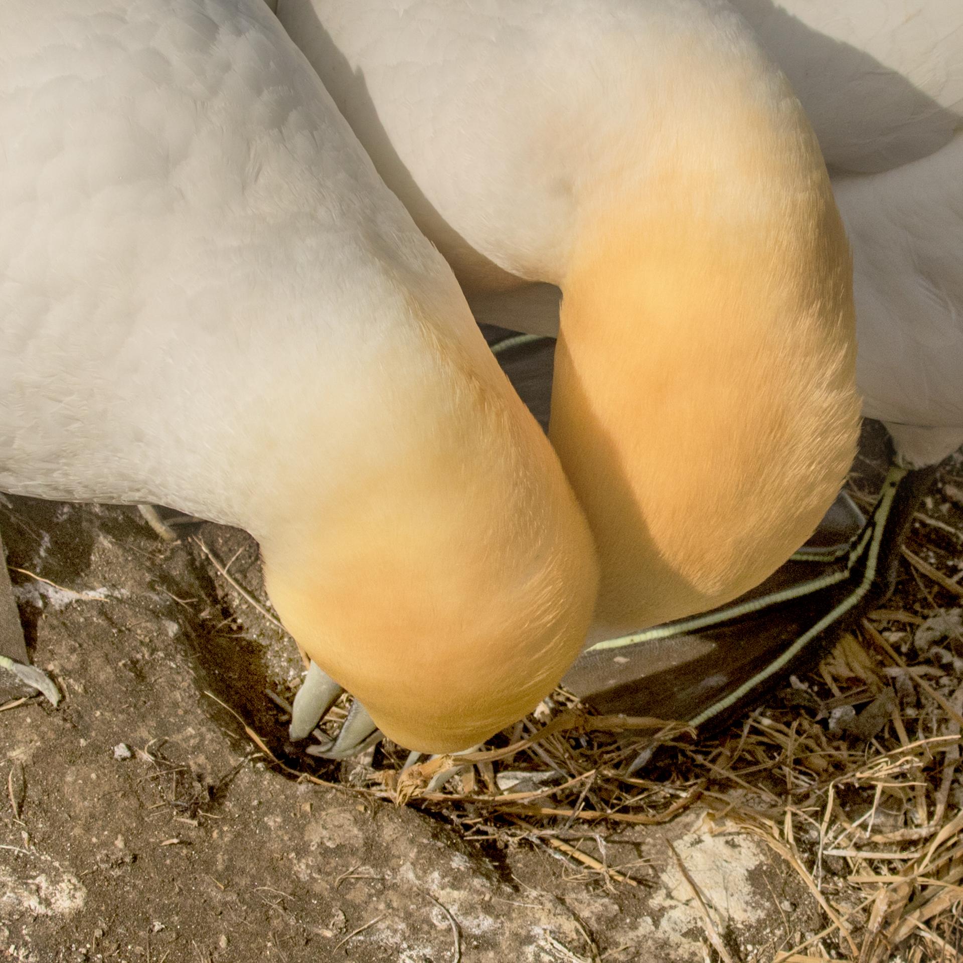 0_F9A7469 snuggles no egg v2.jpg