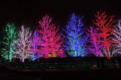 LED Tree Lights.jpg