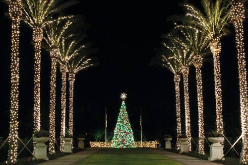 Palm Tree Lights.jpg