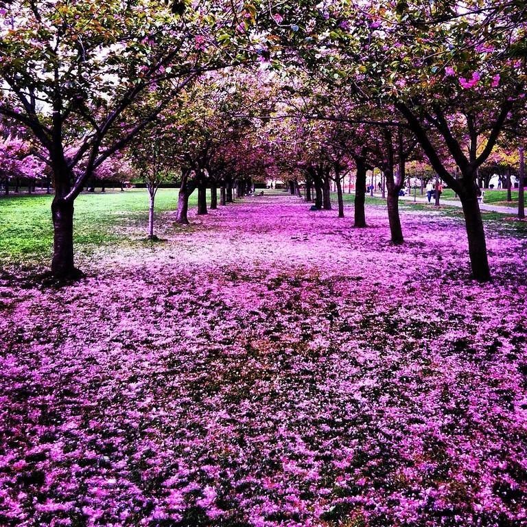 Evan_Dufour_Brooklyn_Botanical.jpg