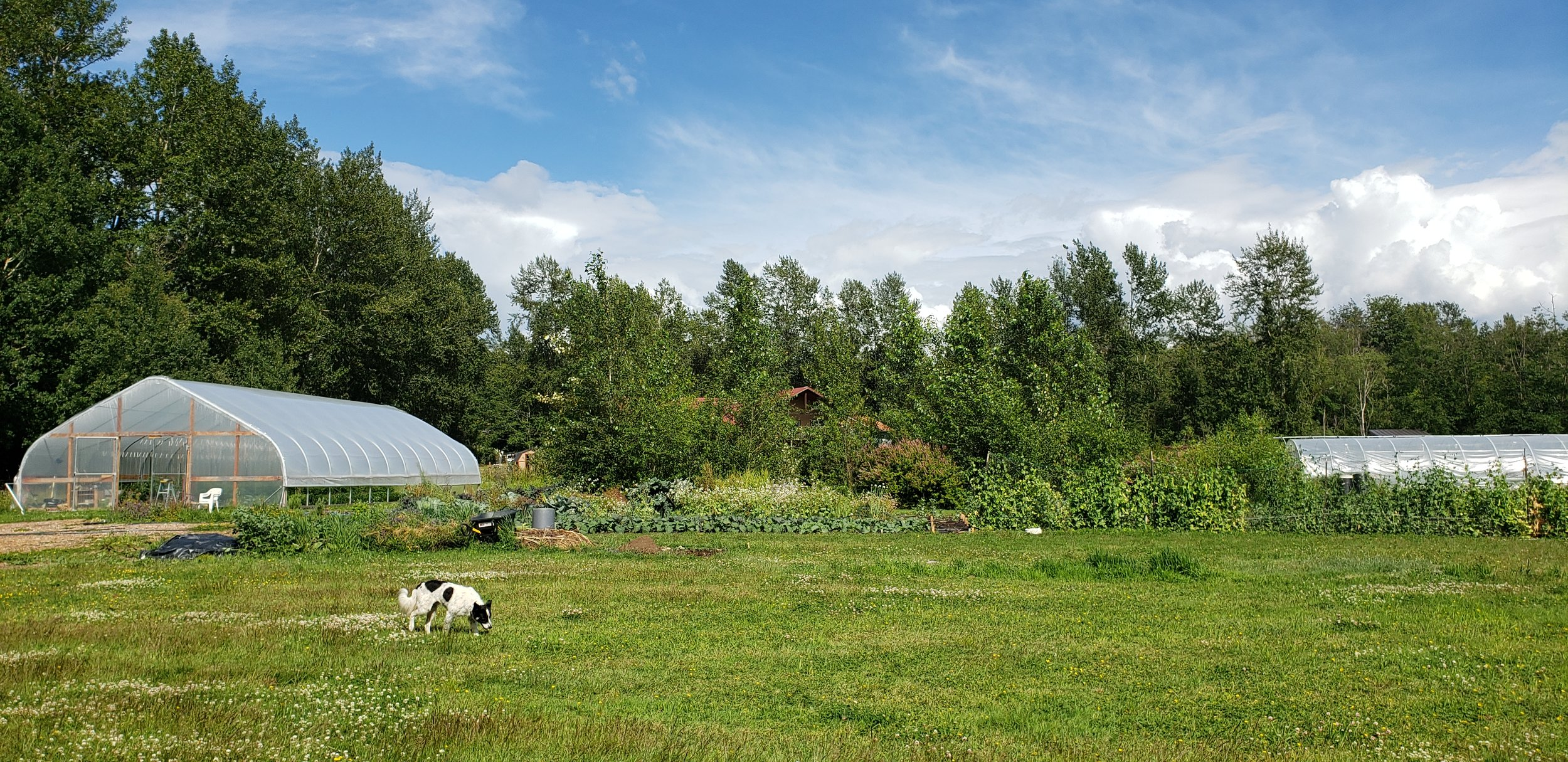 Nourish Craft Farm & Kitchen - Growing pizza and community from the ground up.