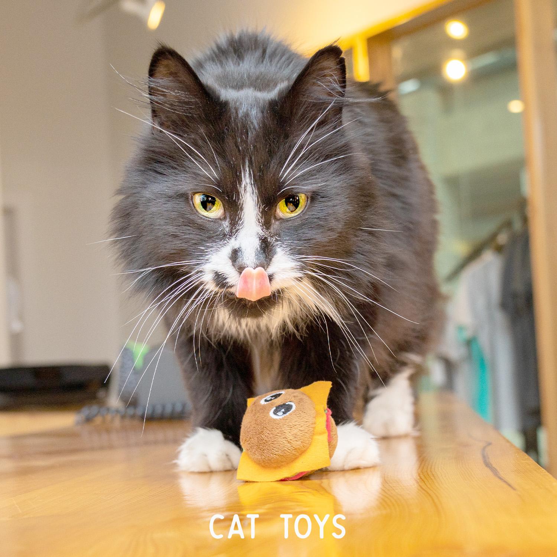 Cat Toys White Font.jpg
