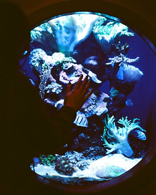 🐠🐚 I highly recommend shooting in an aquarium 🐙🐋