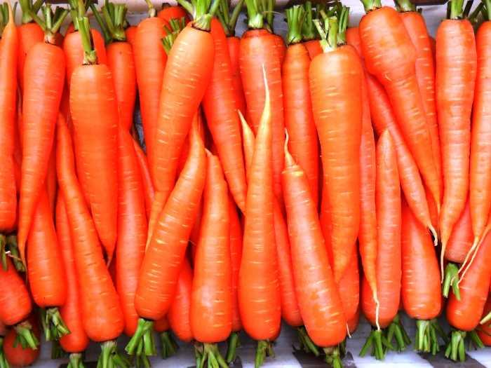 Анализ аллергии на морковь