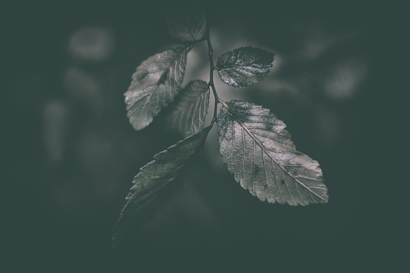 Foley - Crunching Dry Leaves In Hand - Some beautiful organic foley one shots created from the sound of dry leaves crunching. These samples work beautifully within ambient/experimental music and could be used as texture one shots in any musical style.June 1st 2019