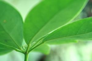 leaf-1353058-1279x852.jpg