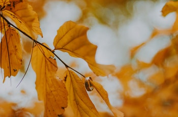 blur-close-up-depth-of-field-792811.jpg